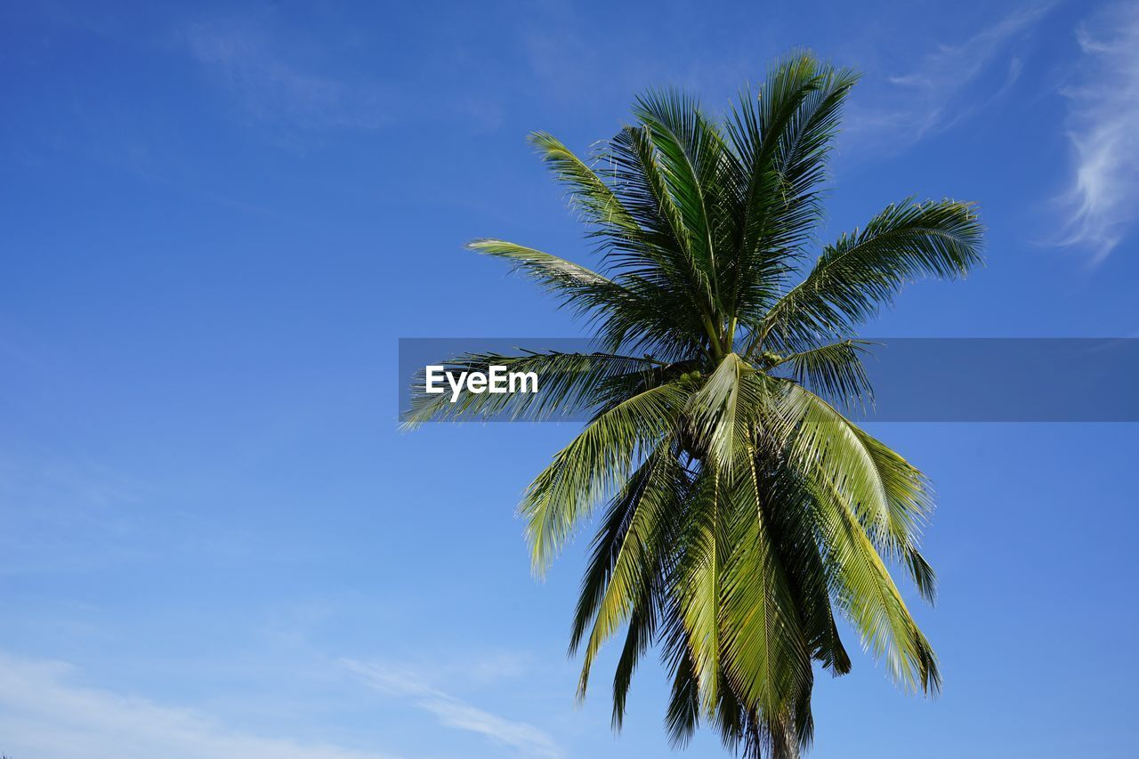 low angle view, palm tree, sky, blue, tree, no people, nature, beauty in nature, outdoors, growth, green color, day, leaf