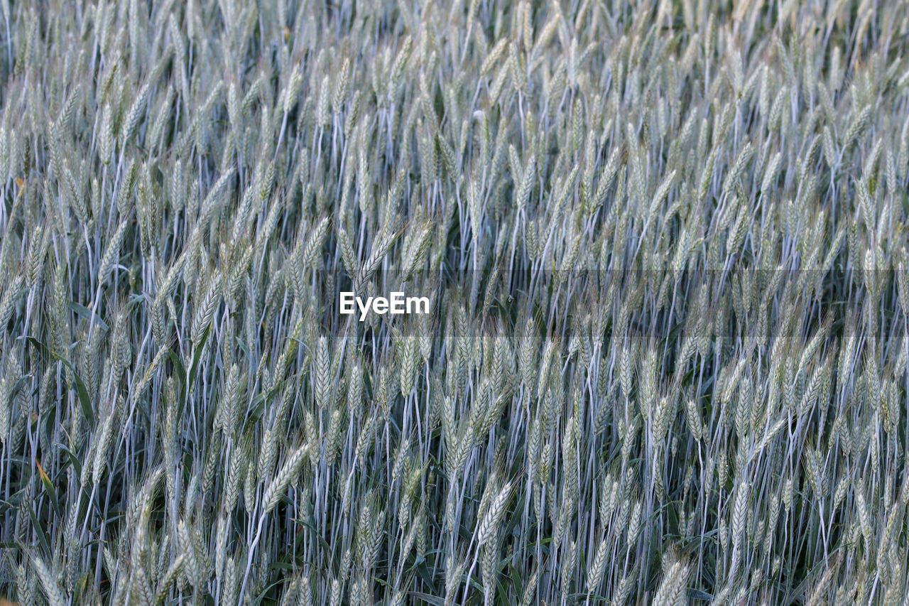 backgrounds, full frame, no people, day, plant, nature, beauty in nature, grass, growth, motion, blurred motion, water, textured, tranquility, pattern, outdoors, close-up, animal themes, high angle view, abstract, softness, ecosystem