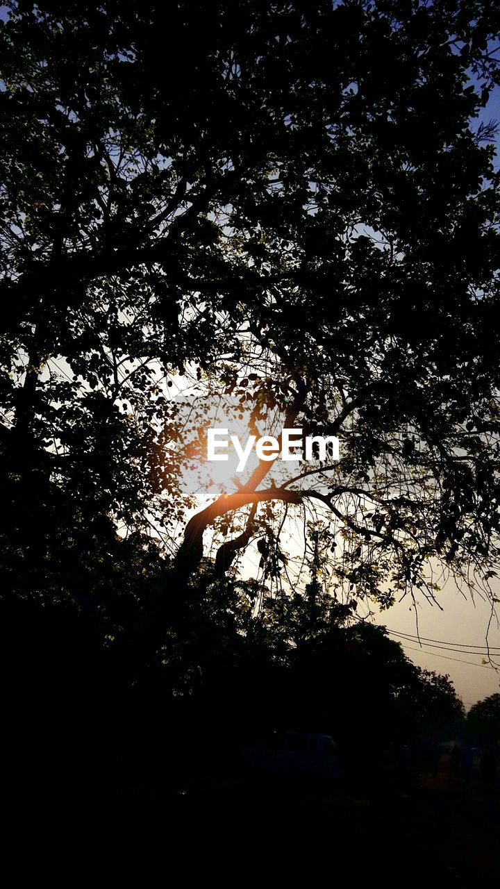 tree, silhouette, nature, no people, day, outdoors, low angle view, branch, animal themes, water, beauty in nature, sky, close-up