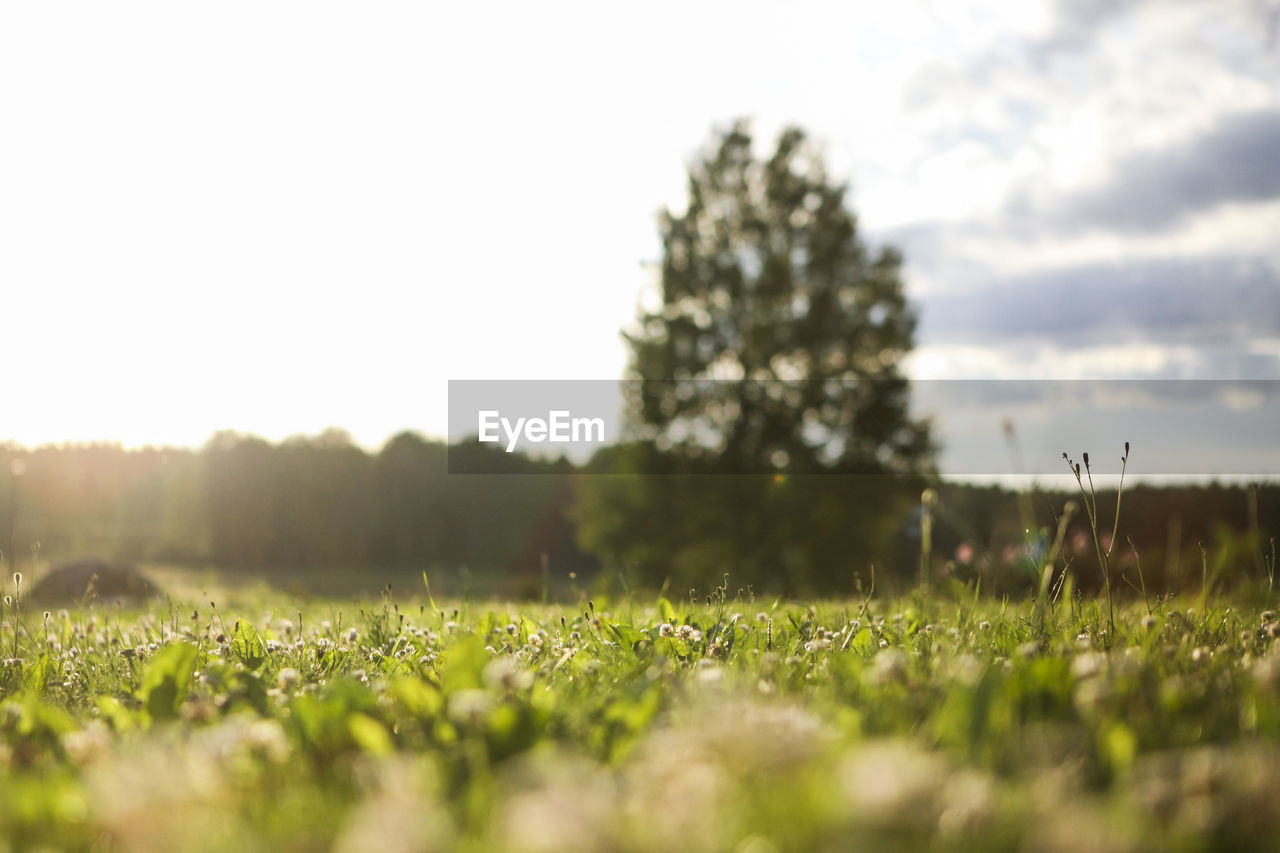 grass, field, nature, growth, green color, selective focus, beauty in nature, tranquility, tree, plant, tranquil scene, landscape, outdoors, no people, sky, day, scenics, close-up, clear sky, freshness