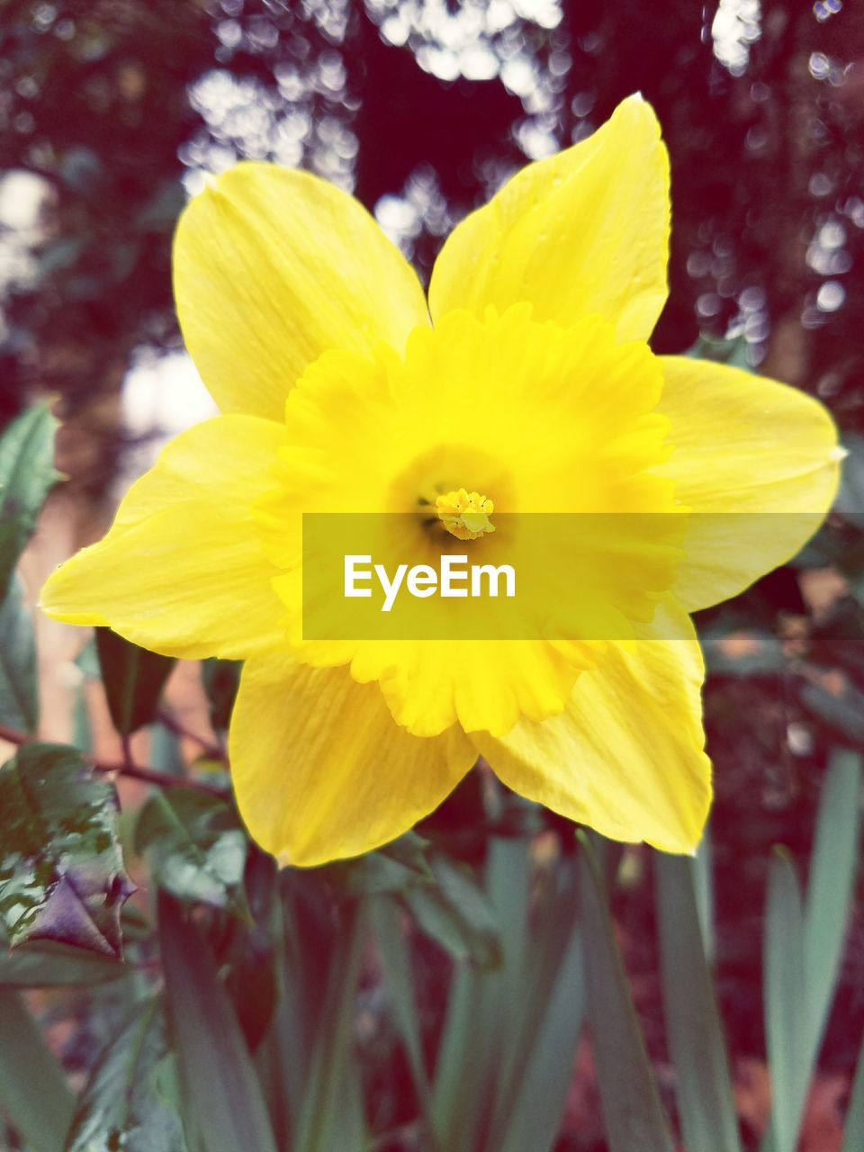 flower, yellow, petal, fragility, flower head, freshness, beauty in nature, nature, growth, plant, day, close-up, outdoors, focus on foreground, blooming, no people, springtime