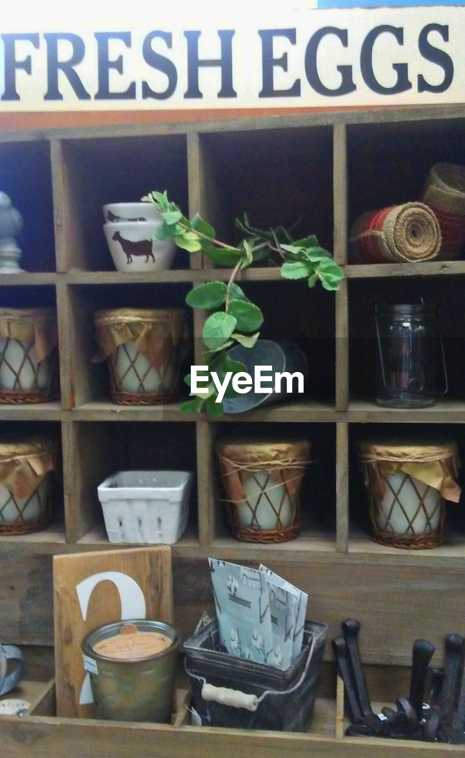 no people, retail, communication, text, shelf, for sale, store, growth, plant, potted plant, arrangement, container, day, indoors, western script, transparent, large group of objects, choice, leaf, variation, sale, retail display