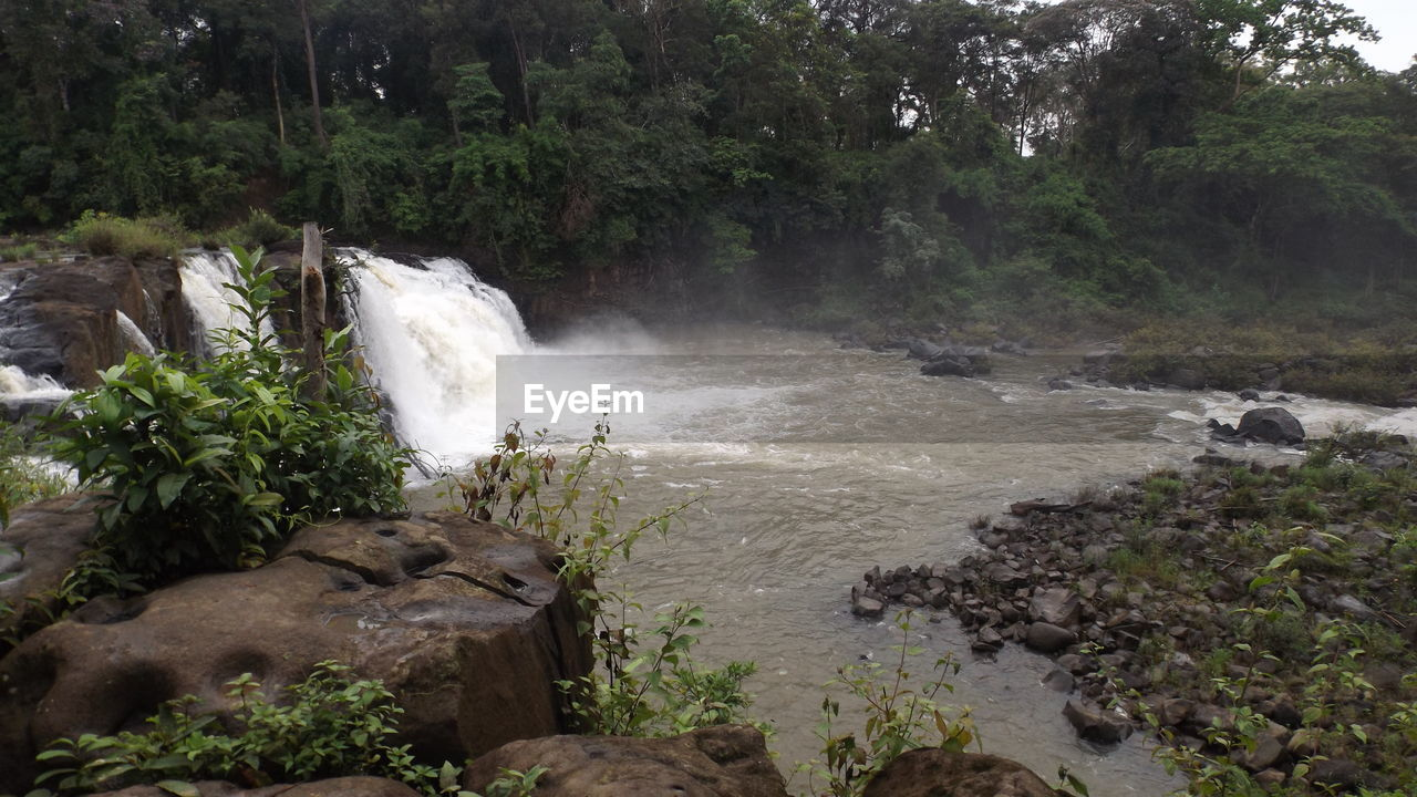 water, plant, tree, forest, rock, land, nature, motion, rock - object, day, solid, beauty in nature, waterfall, environment, scenics - nature, river, no people, flowing water, growth, outdoors, flowing, pollution, power in nature, rainforest