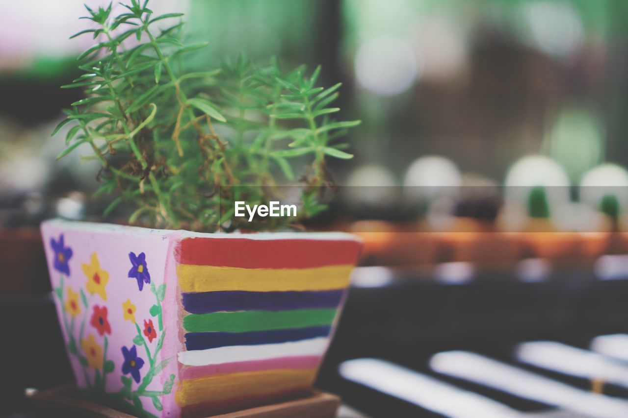multi colored, close-up, table, no people, focus on foreground, selective focus, potted plant, indoors, green color, plant, day, celebration, striped, nature, container, growth, still life, box, flower pot