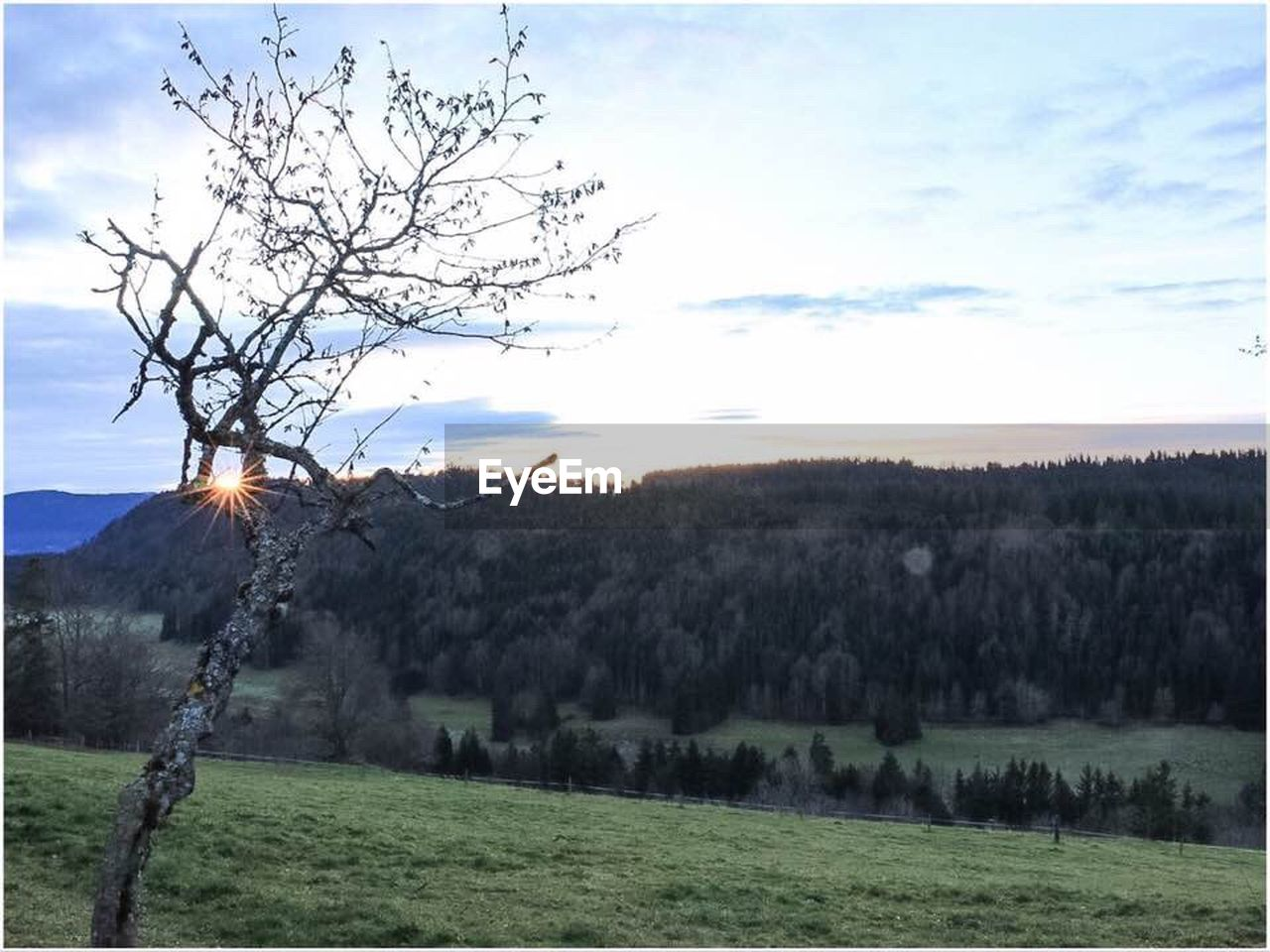 tree, sky, nature, beauty in nature, tranquil scene, tranquility, grass, scenics, no people, bare tree, landscape, outdoors, field, water, day, growth, mountain