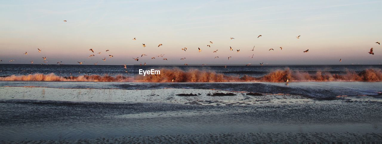 sky, water, bird, sunset, beauty in nature, motion, scenics - nature, vertebrate, flying, large group of animals, animal themes, group of animals, animal, nature, animals in the wild, animal wildlife, no people, sea, beach, flock of birds, horizon over water, outdoors, power in nature