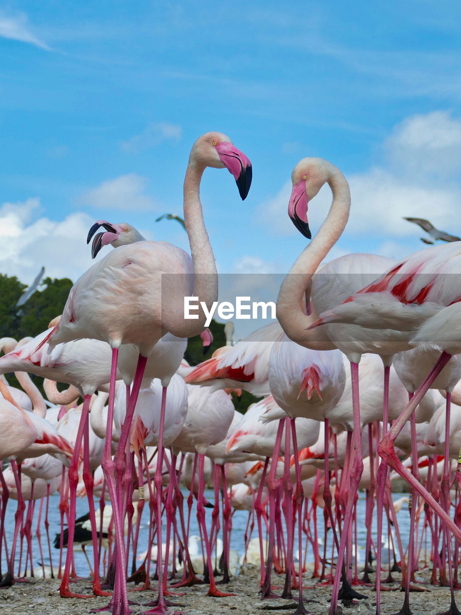 View of flamingo in sea against sky
