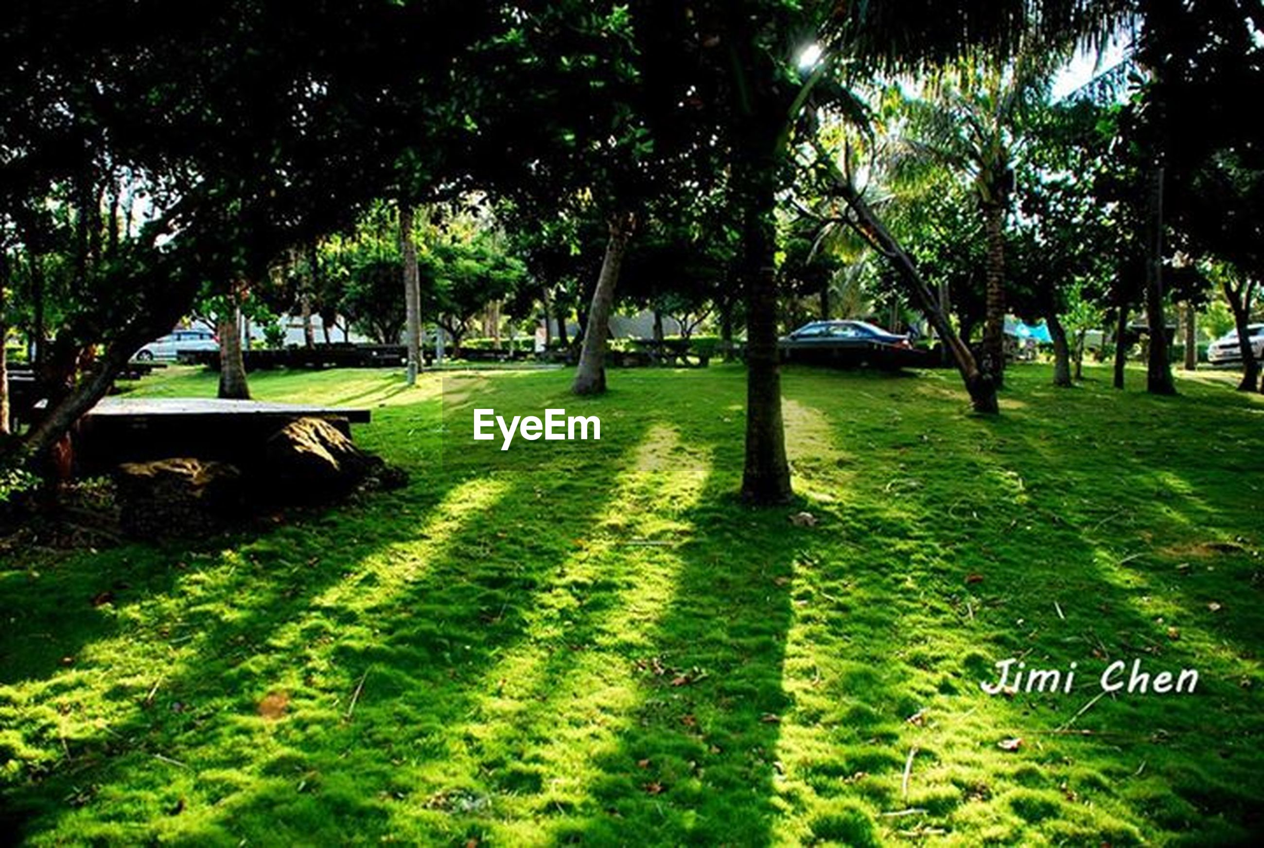 tree, grass, green color, park - man made space, growth, park, text, incidental people, nature, tree trunk, sunlight, branch, communication, western script, day, tranquility, transportation, outdoors, lawn, field