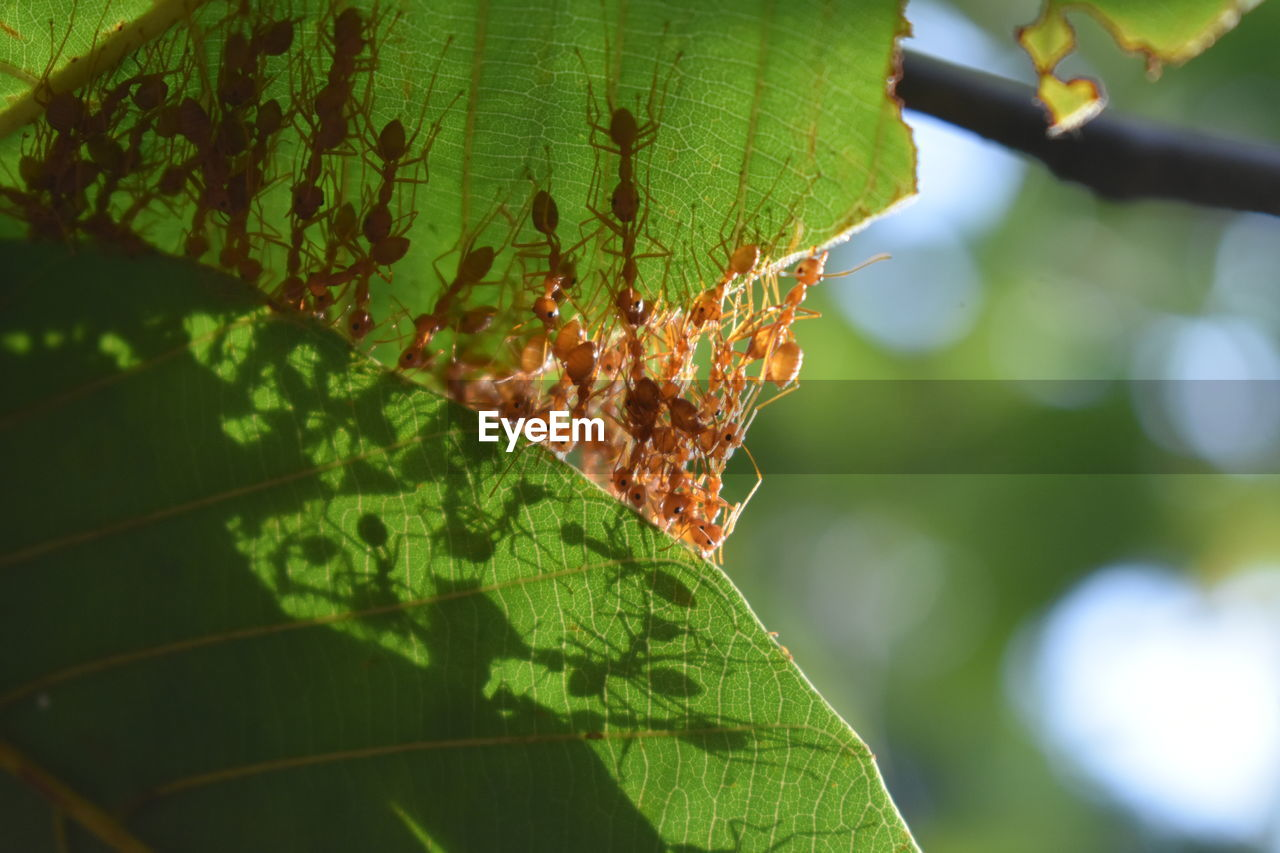 leaf, plant part, green color, close-up, growth, plant, day, nature, focus on foreground, beauty in nature, no people, sunlight, outdoors, tree, animal wildlife, leaf vein, selective focus, insect, invertebrate, fragility, leaves