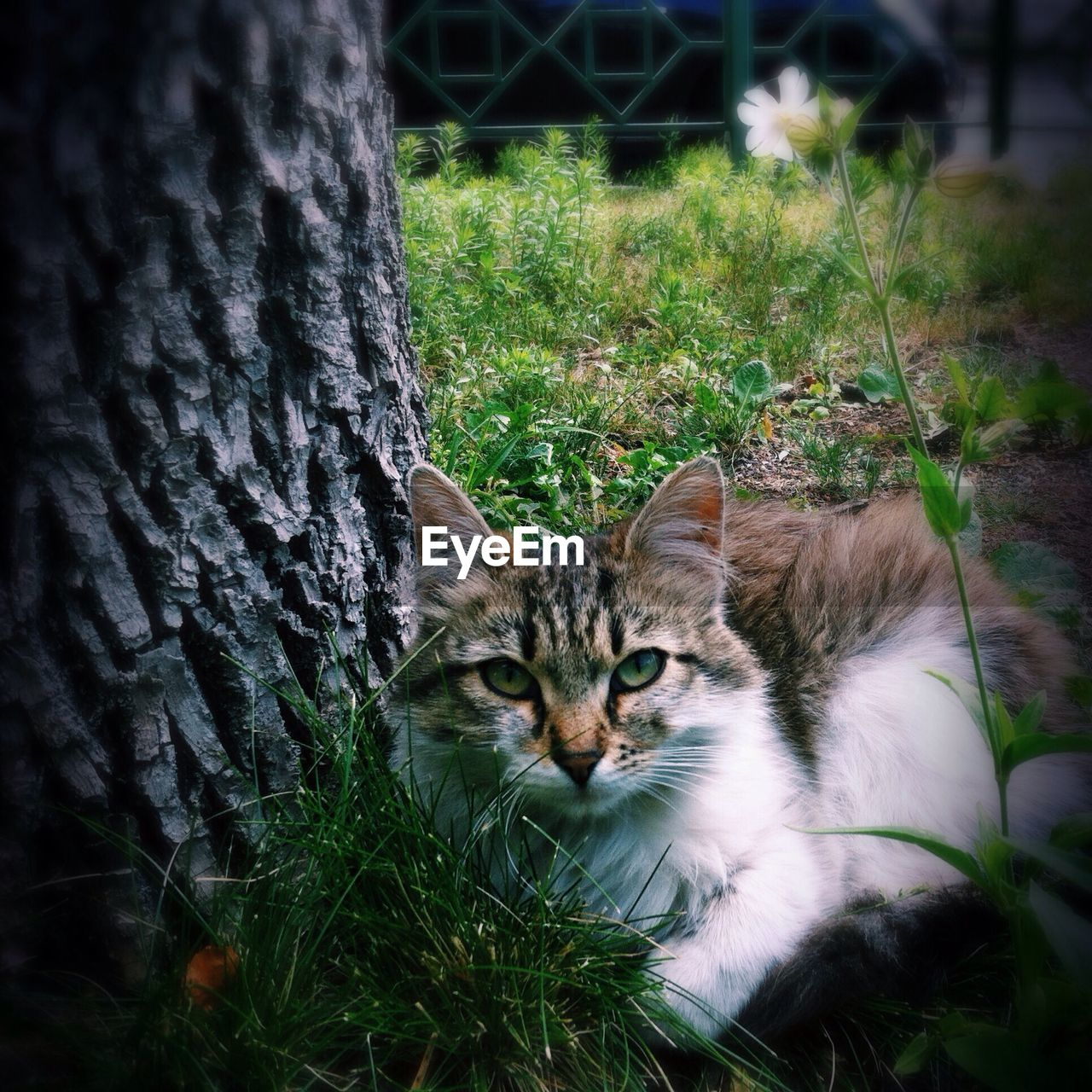 Close-up portrait of a cat by tree