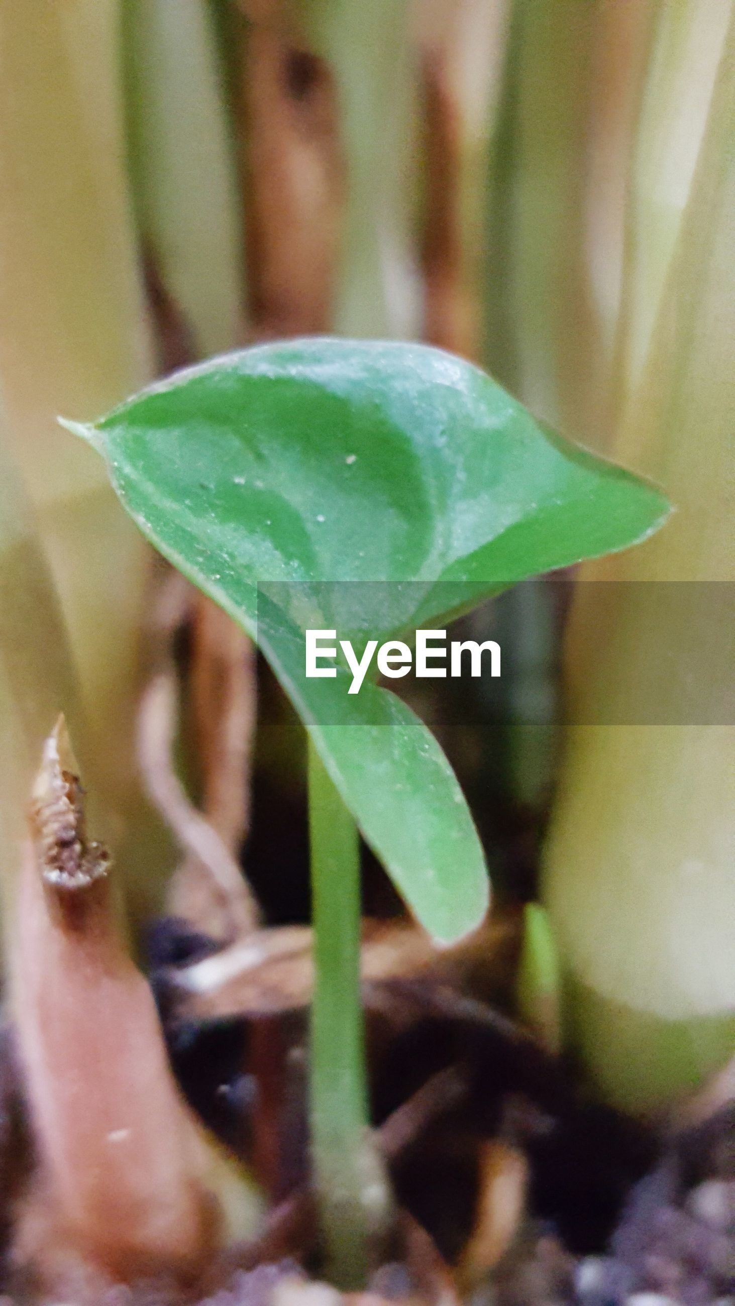 leaf, growth, green color, plant, close-up, focus on foreground, nature, selective focus, beginnings, stem, new life, bud, beauty in nature, freshness, growing, green, fragility, outdoors, day, no people
