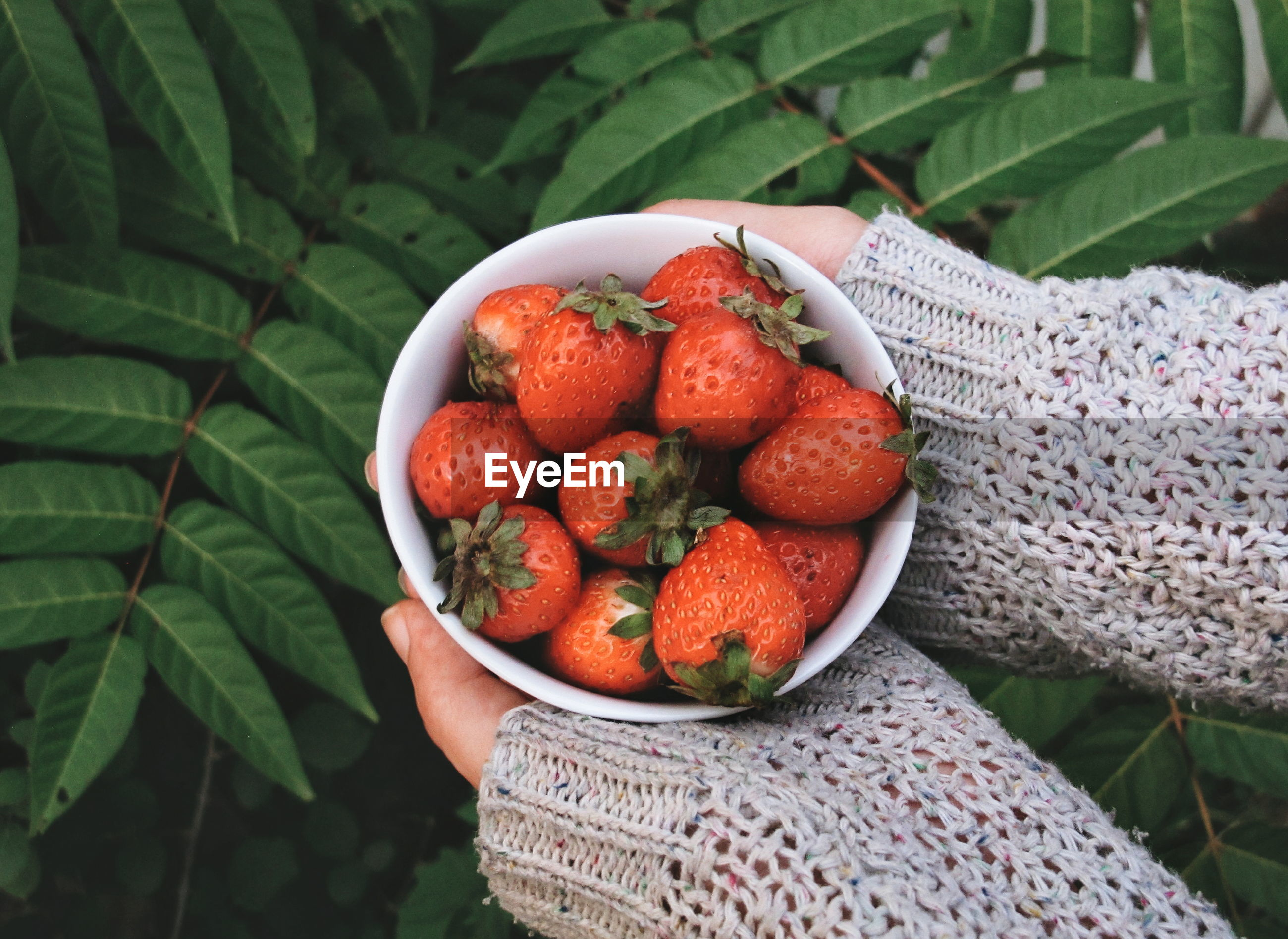 Cropped hands holding strawberries in bowl