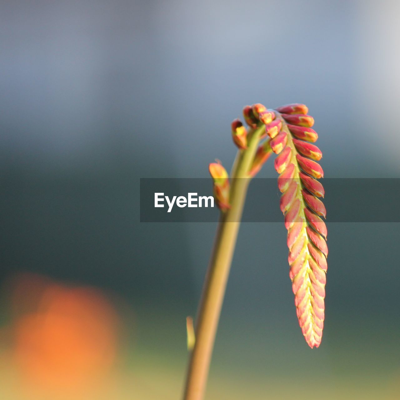 close-up, focus on foreground, plant, nature, beauty in nature, no people, growth, day, plant stem, outdoors, flower, selective focus, flowering plant, fragility, vulnerability, animal themes, one animal, sunlight, orange color, insect