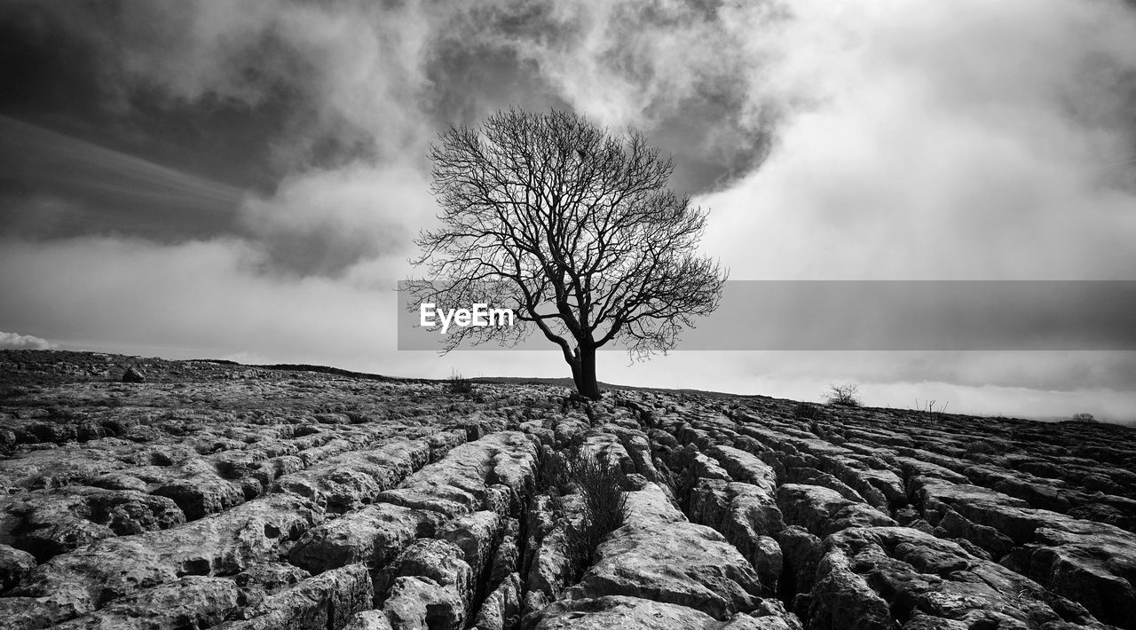 sky, cloud - sky, tranquil scene, tranquility, beauty in nature, tree, environment, bare tree, scenics - nature, landscape, non-urban scene, nature, land, no people, day, plant, remote, outdoors, field, solitude, isolated