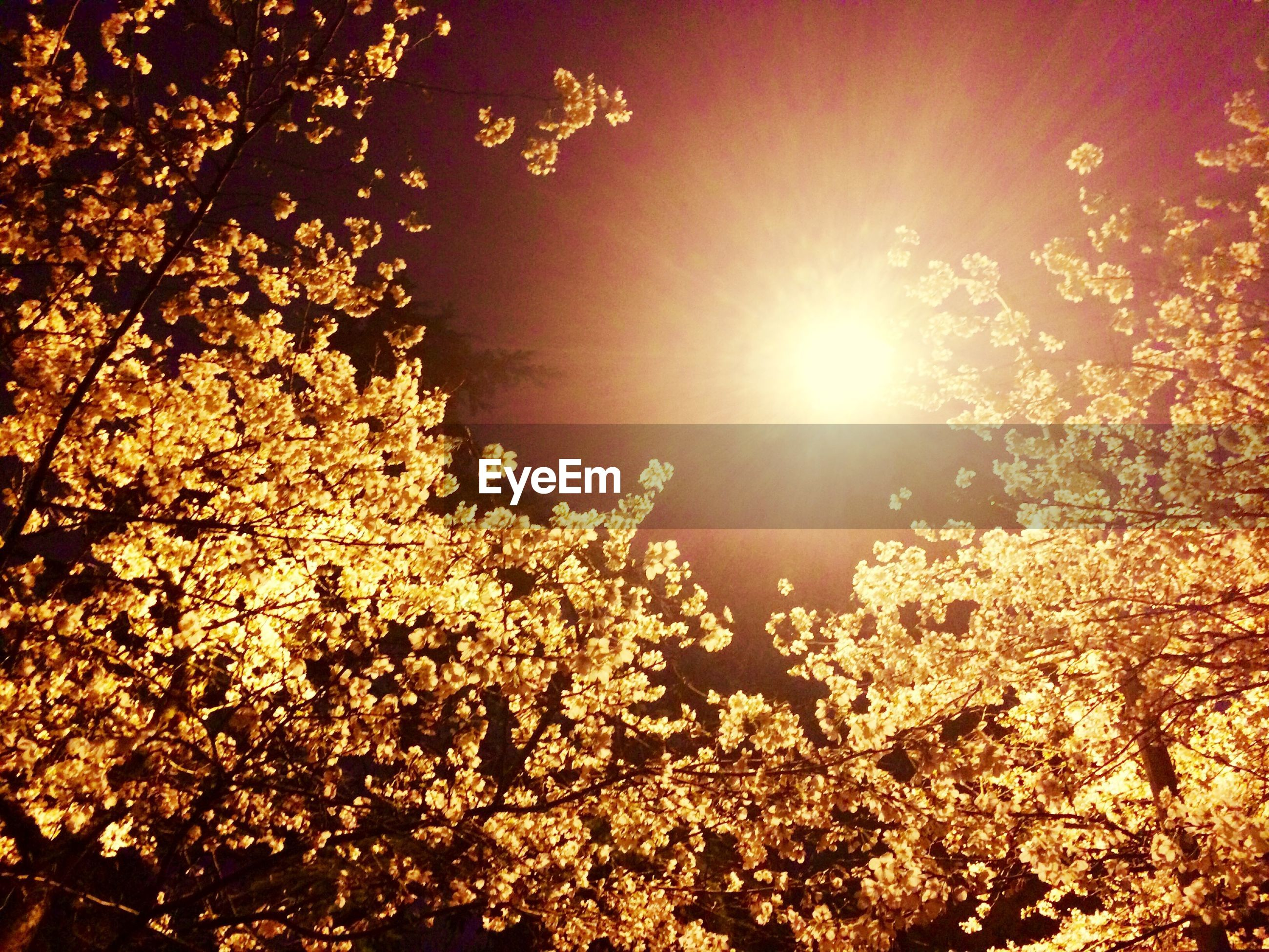 tree, low angle view, branch, growth, nature, beauty in nature, sunlight, sun, sky, outdoors, tranquility, lens flare, no people, sunbeam, lighting equipment, silhouette, day, street light, clear sky, high section