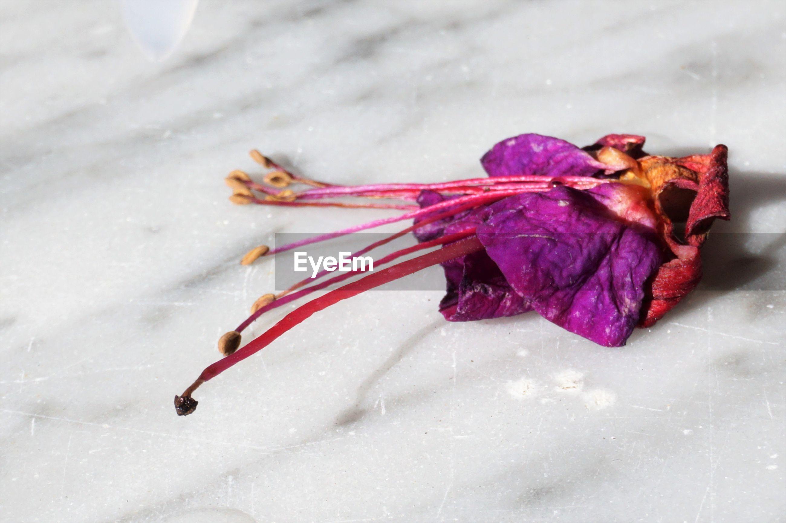 High angle view of a fallen flower