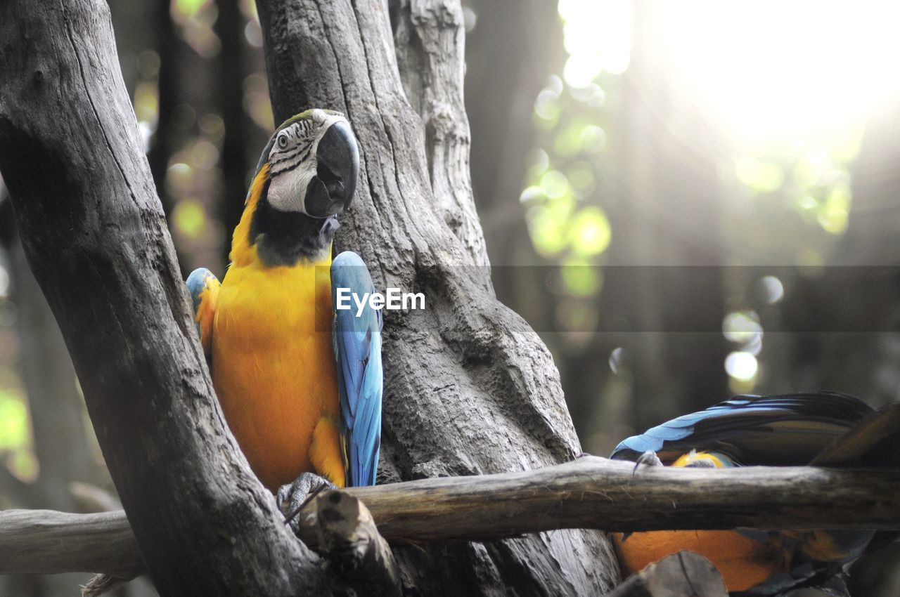 vertebrate, animal wildlife, tree, bird, animal, focus on foreground, perching, animal themes, animals in the wild, trunk, tree trunk, day, no people, nature, plant, parrot, close-up, branch, wood - material, outdoors