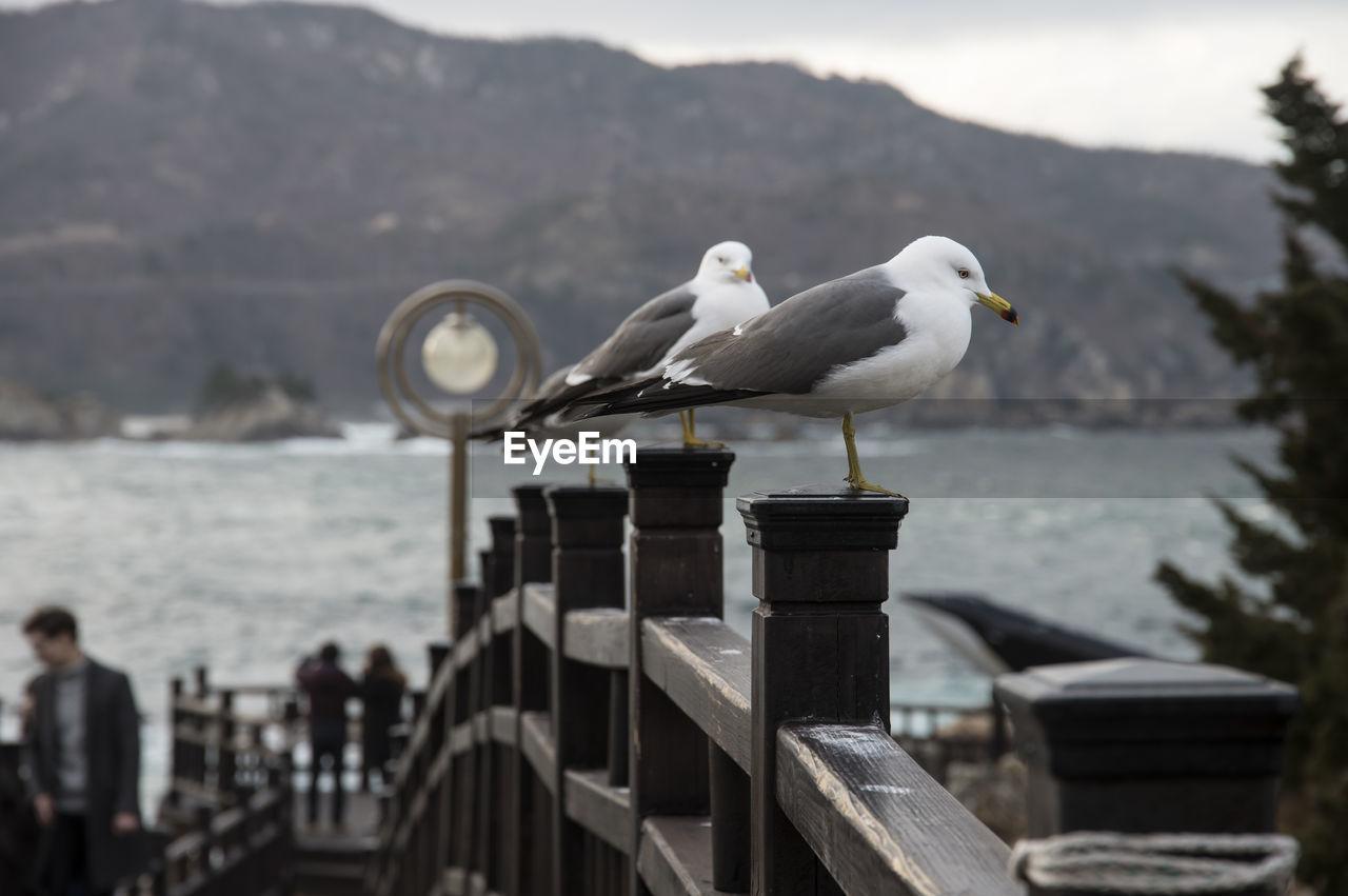 Seagulls Perching On Railing At Bridge Against Sea