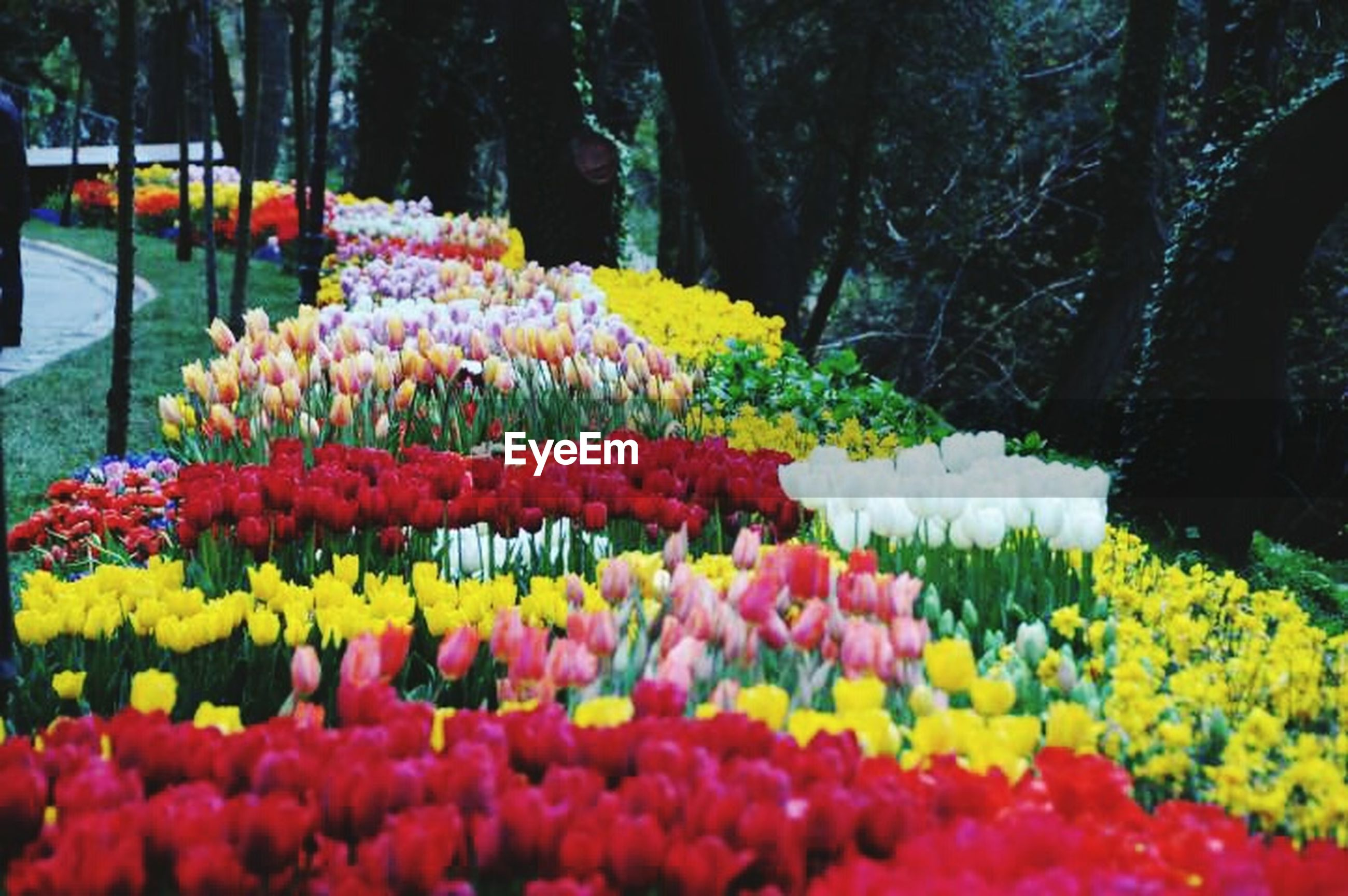flower, freshness, fragility, growth, beauty in nature, abundance, tree, nature, park - man made space, blooming, yellow, red, petal, flowerbed, blossom, multi colored, in bloom, springtime, outdoors, plant