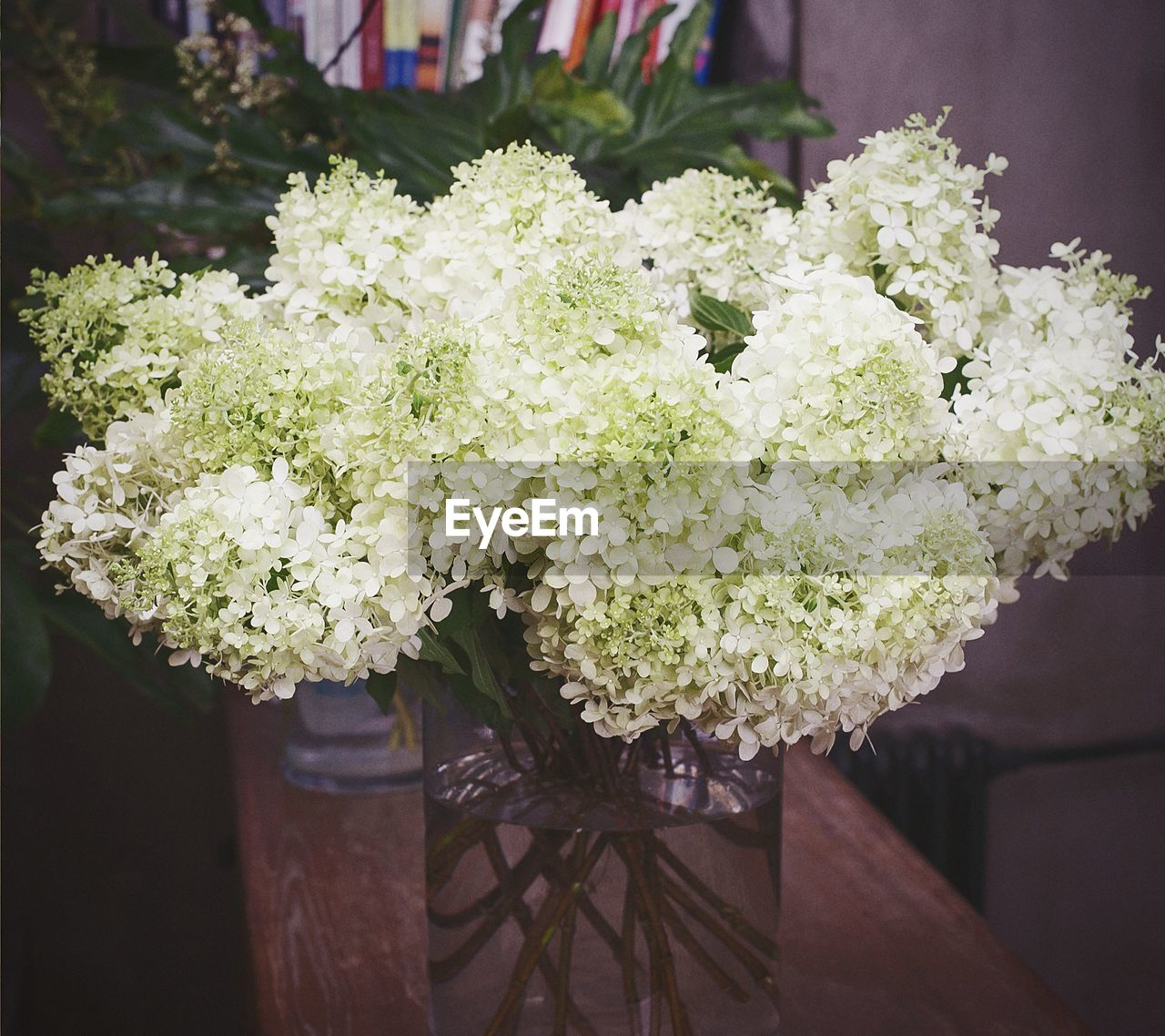 focus on foreground, flower, no people, close-up, freshness, day, outdoors, growth, nature, food