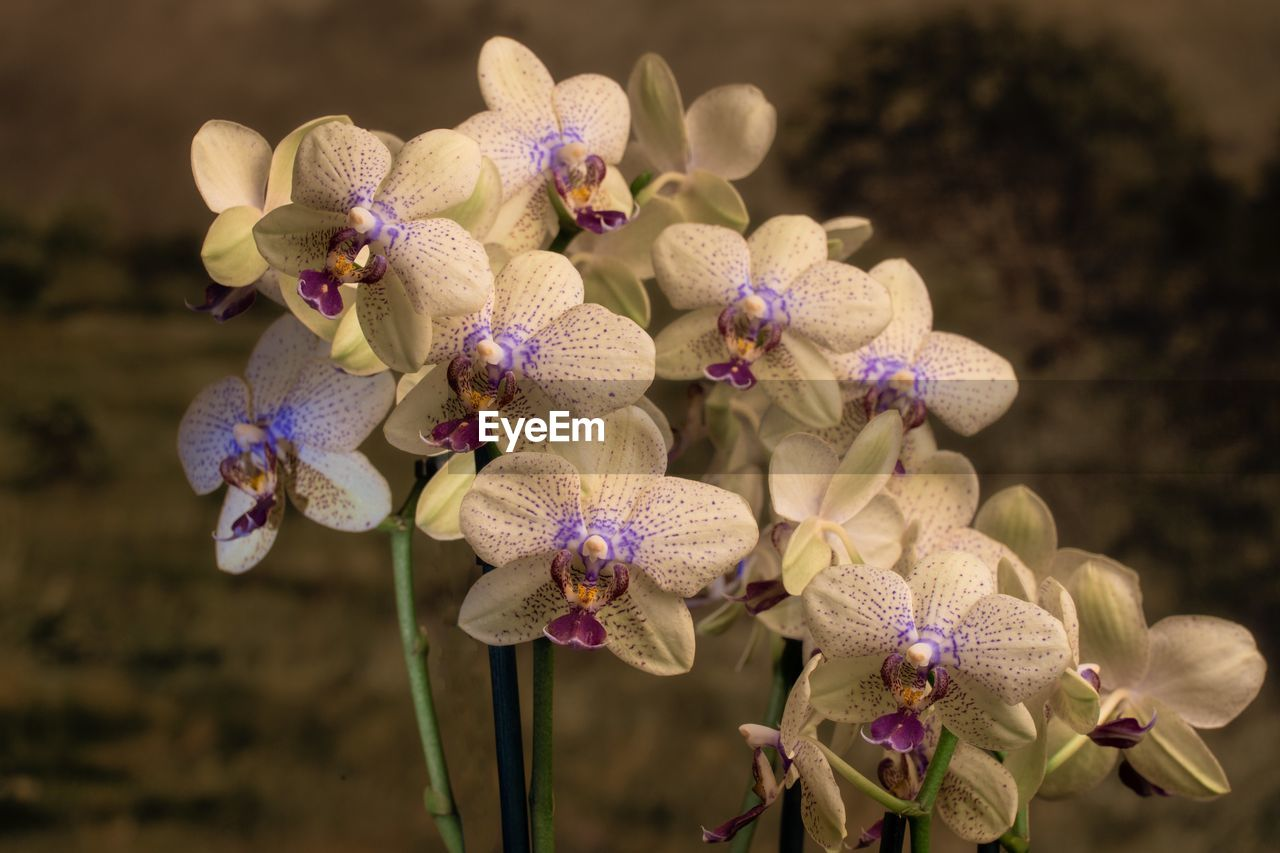 Close-Up Of Purple Orchid Flowers On Field