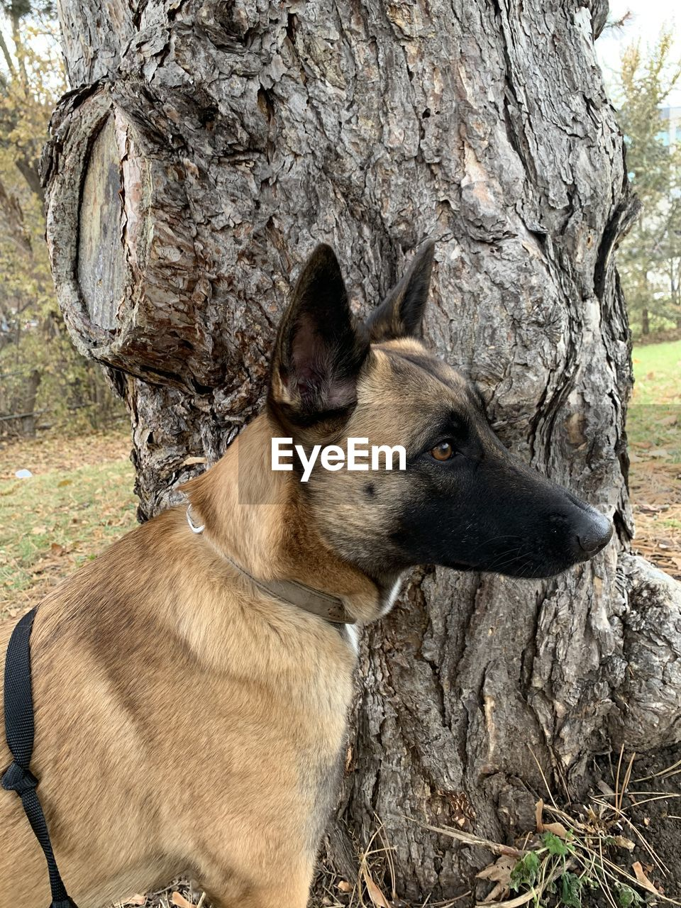 CLOSE-UP OF A DOG SITTING ON TREE