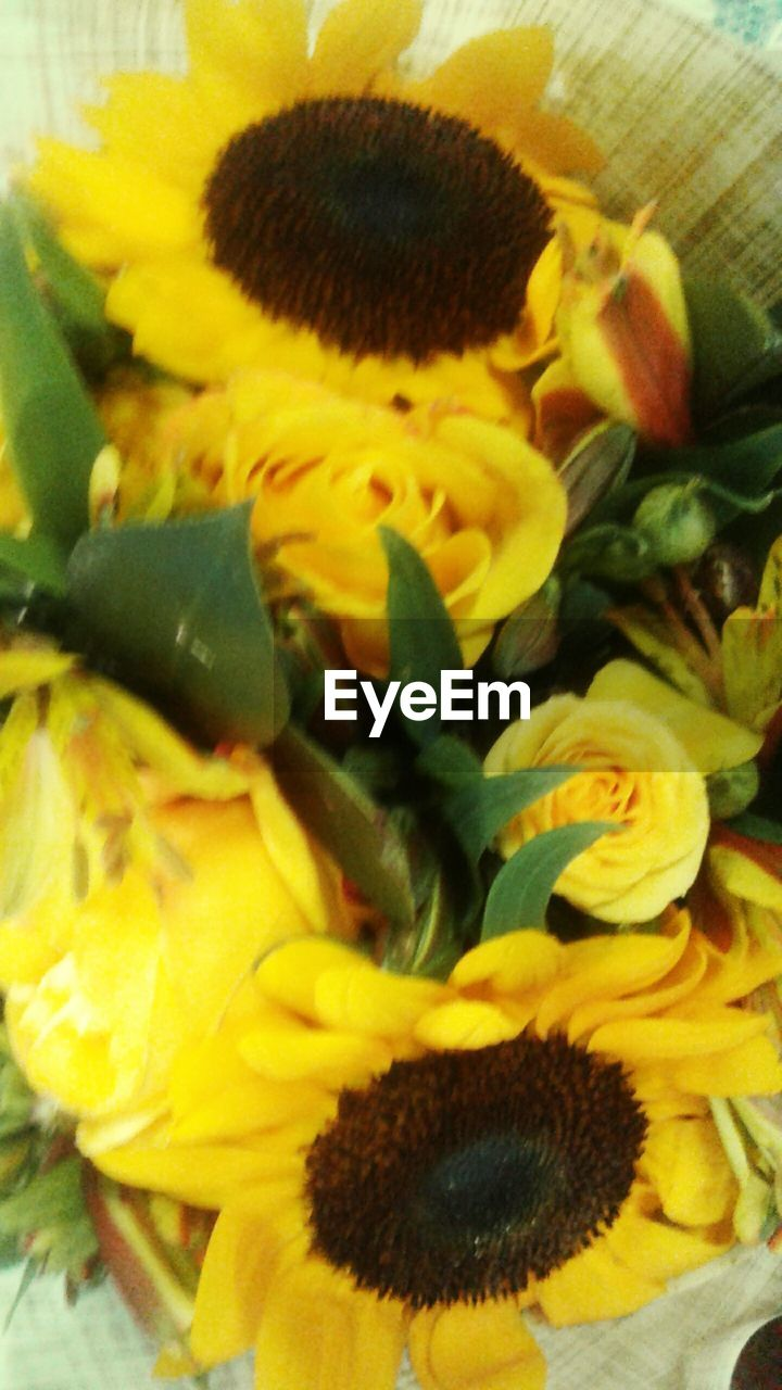 yellow, flower, flowering plant, close-up, freshness, flower head, plant, inflorescence, petal, vulnerability, fragility, no people, beauty in nature, nature, indoors, sunflower, growth, high angle view, animal wildlife, animal