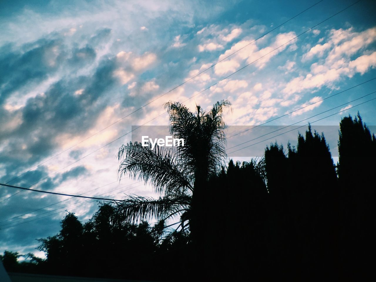 tree, silhouette, low angle view, sky, nature, growth, beauty in nature, no people, tranquility, sunset, outdoors, day