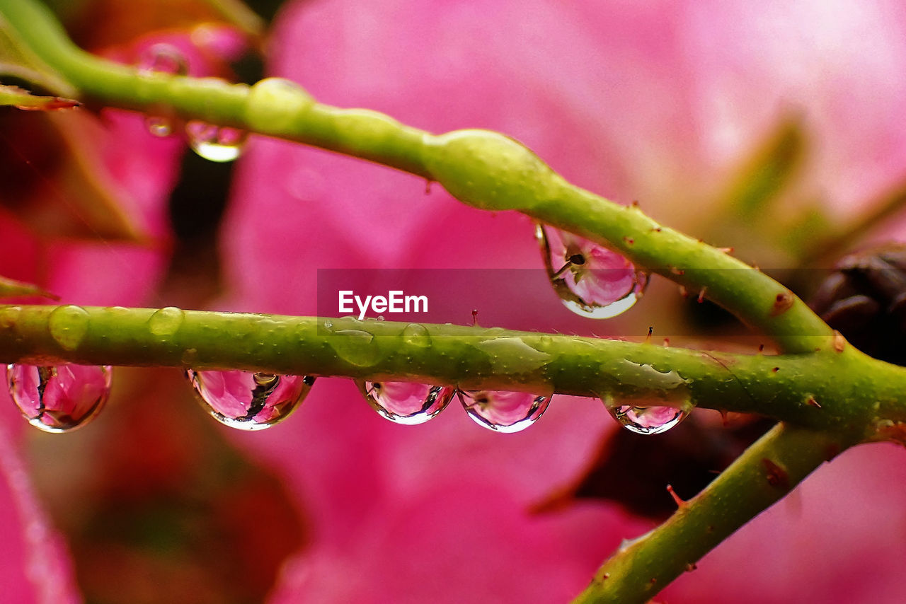drop, nature, growth, plant, water, wet, close-up, beauty in nature, fragility, freshness, no people, raindrop, droplet, day, outdoors, focus on foreground, green color