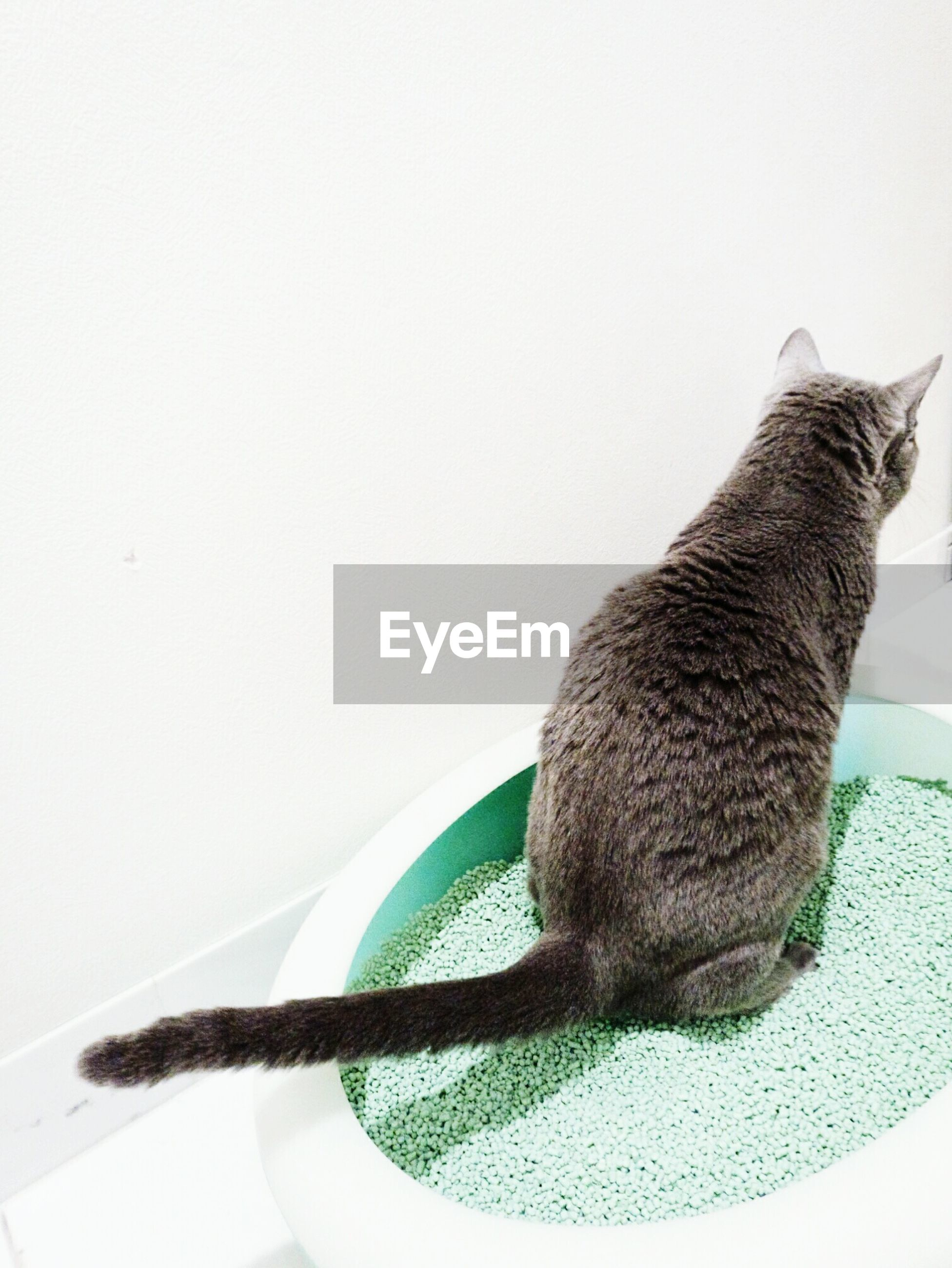 copy space, indoors, one animal, white background, studio shot, animal themes, close-up, domestic cat, clear sky, no people, cat, still life, animal head, pets, home interior, table, side view, domestic animals, part of, cut out
