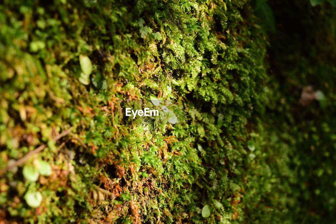 growth, nature, green color, moss, growing, plant, fungus, no people, beauty in nature, outdoors, day, lichen, leaf, close-up, mushroom, forest, fragility, toadstool, tree, fly agaric