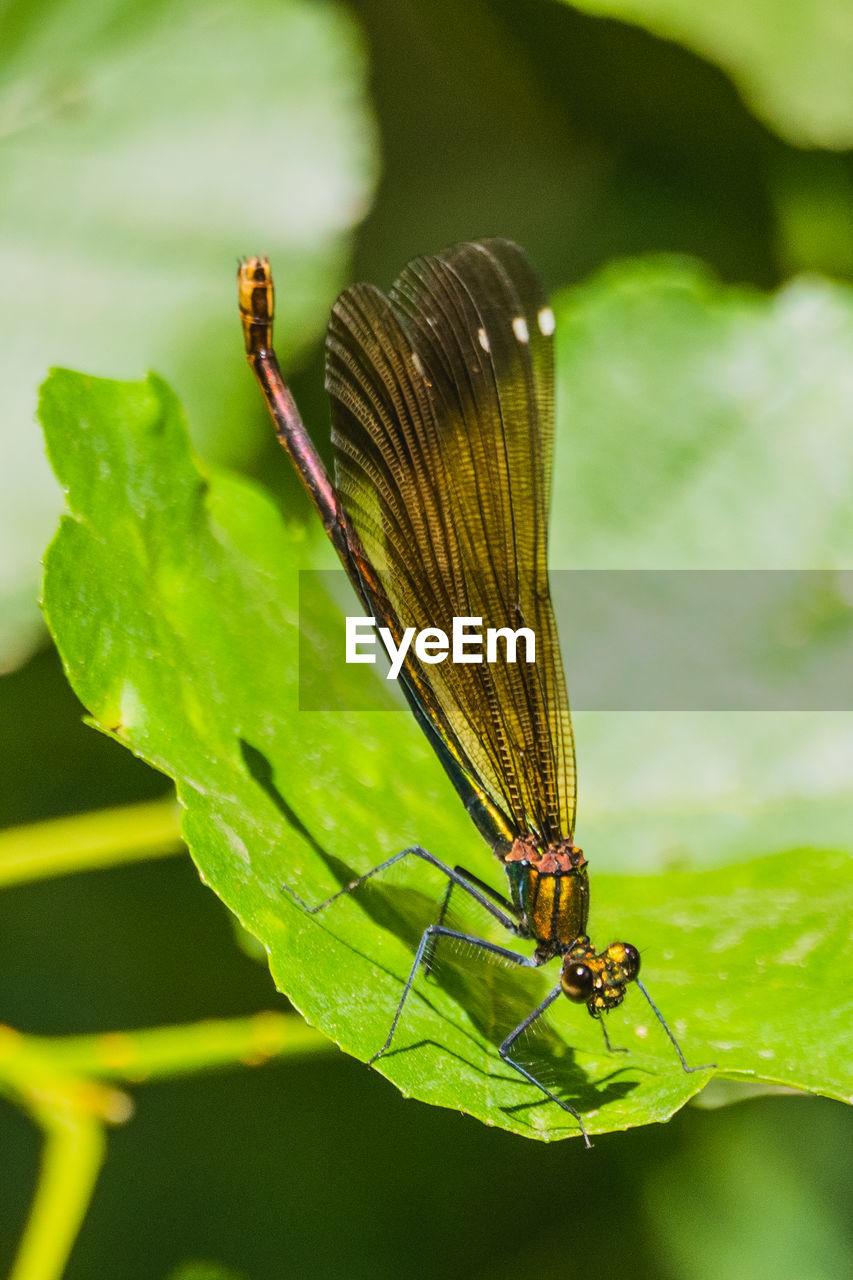invertebrate, insect, animal wildlife, animal themes, animals in the wild, animal, one animal, plant part, leaf, animal wing, close-up, focus on foreground, green color, nature, day, plant, no people, growth, outdoors
