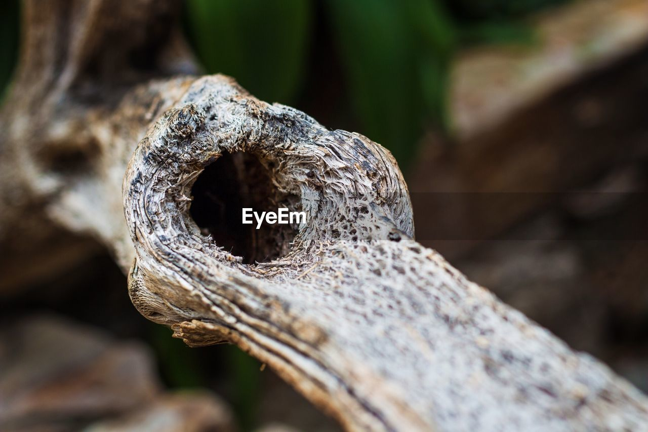 close-up, selective focus, no people, day, focus on foreground, textured, nature, pattern, plant, wood - material, outdoors, metal, rusty, rough, weathered, old, still life, tree, brown, hole