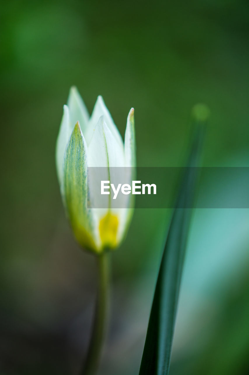 flower, flowering plant, plant, growth, beauty in nature, vulnerability, fragility, freshness, close-up, beginnings, petal, new life, green color, no people, nature, focus on foreground, day, inflorescence, flower head, plant stem, outdoors, sepal