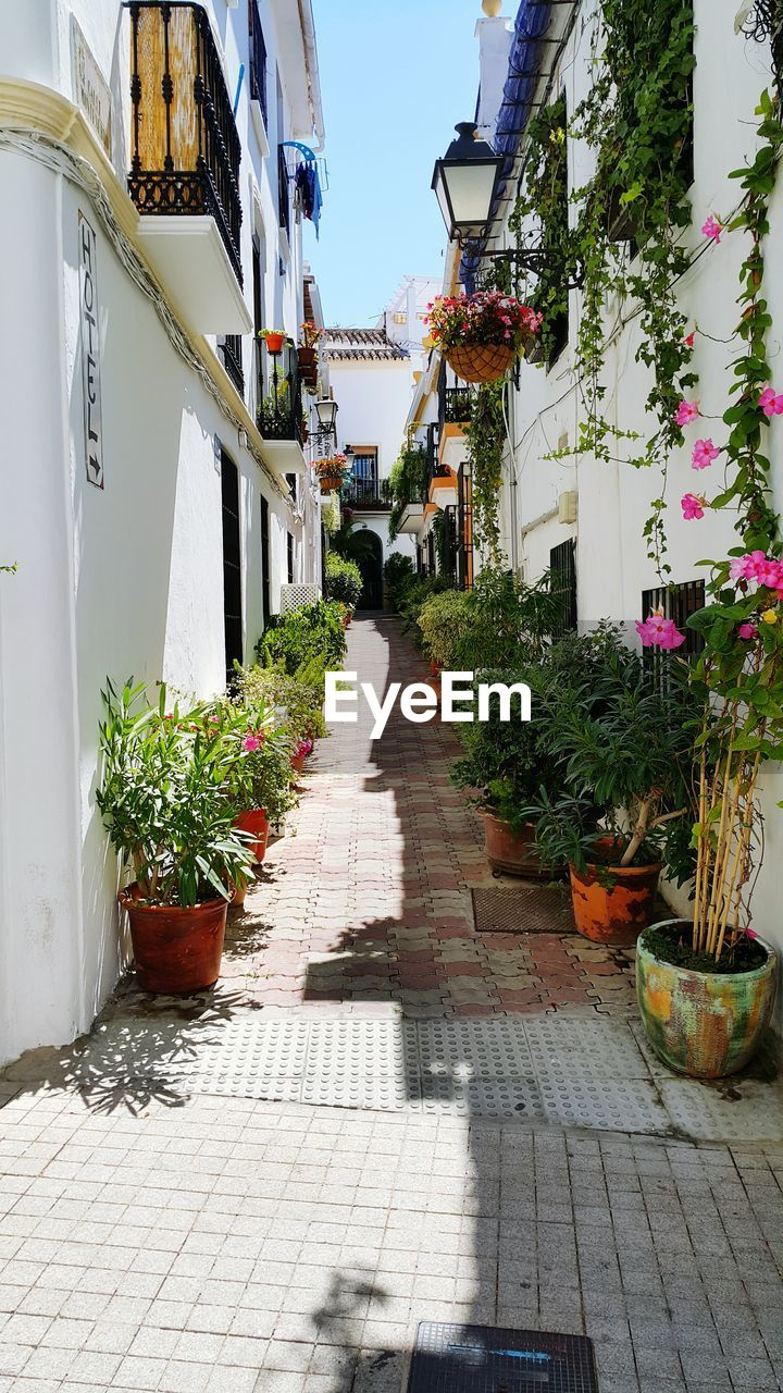 Potted Plants On Alley Against Clear Sky
