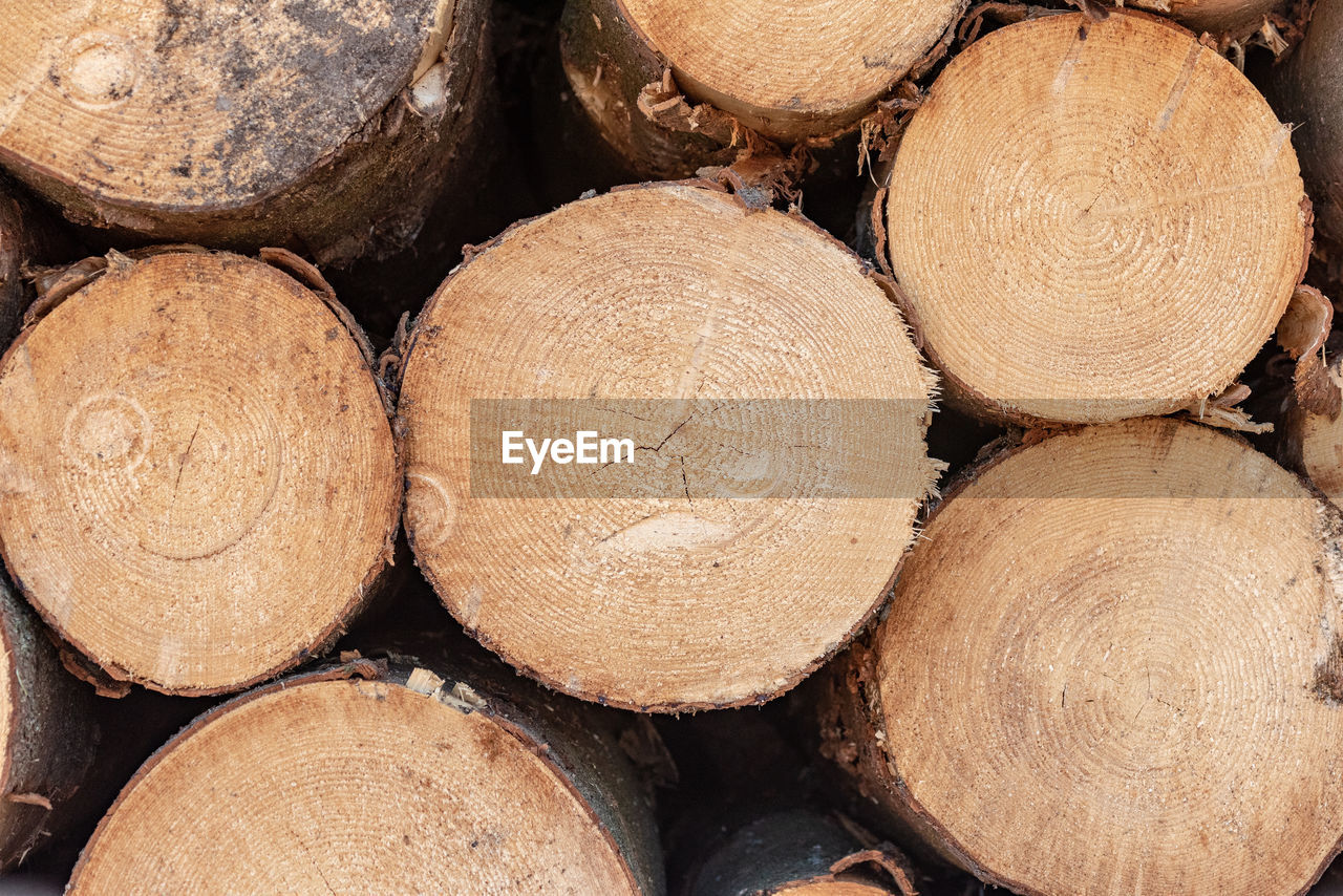 FULL FRAME SHOT OF LOGS IN A FOREST