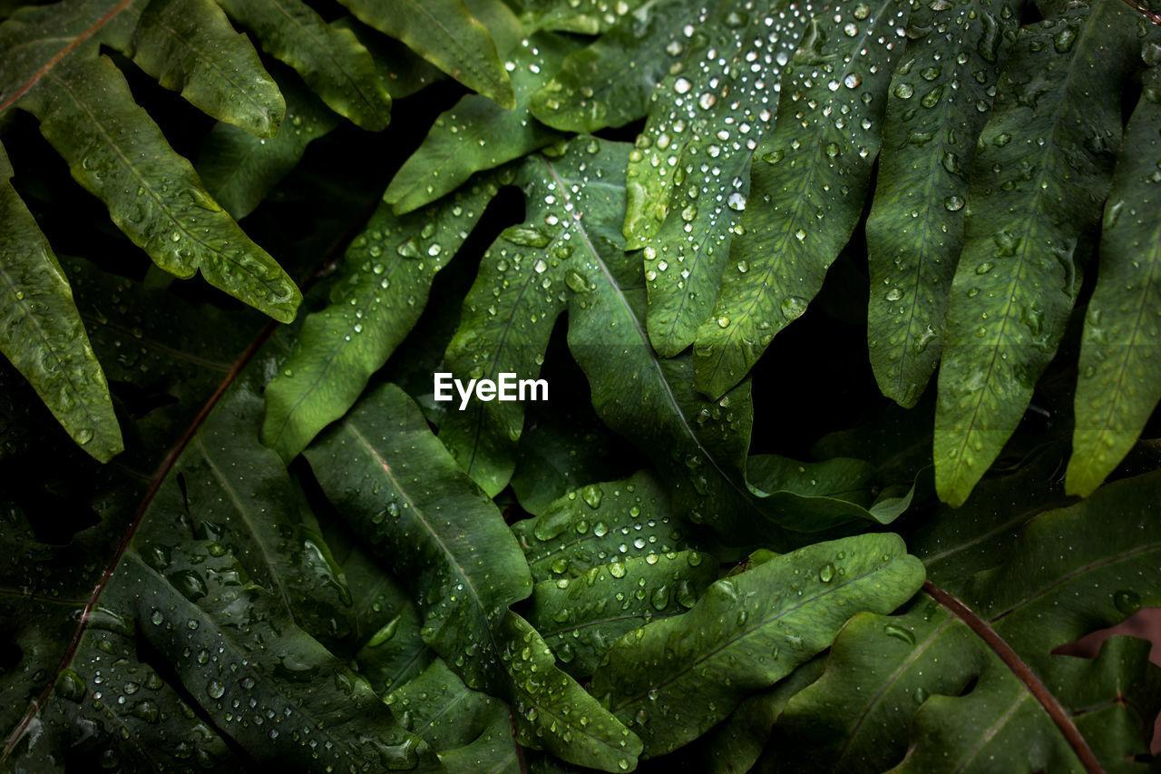 Full frame shot of wert leaves