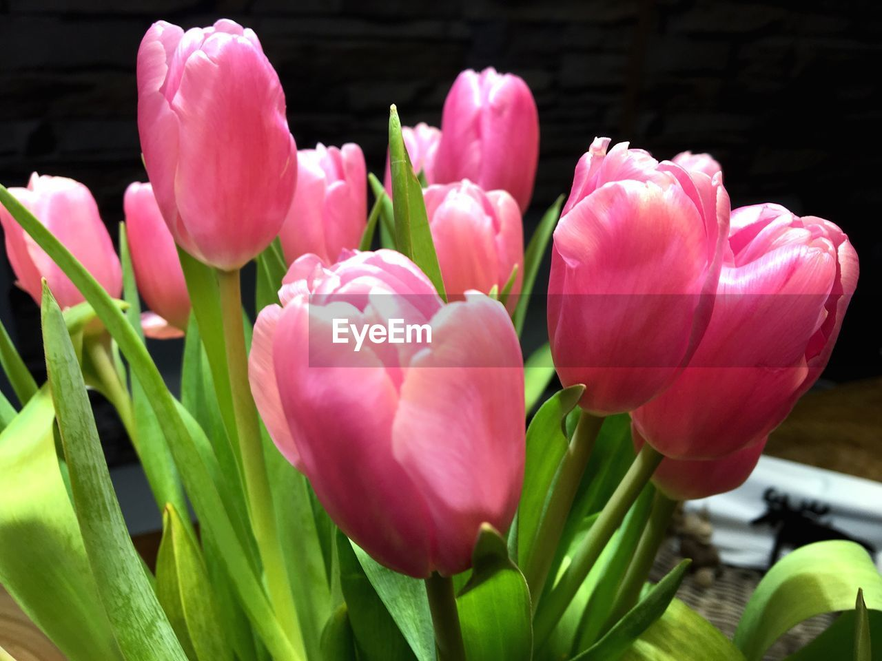flower, petal, fragility, growth, freshness, beauty in nature, pink color, nature, flower head, tulip, no people, plant, close-up, day, blooming, outdoors