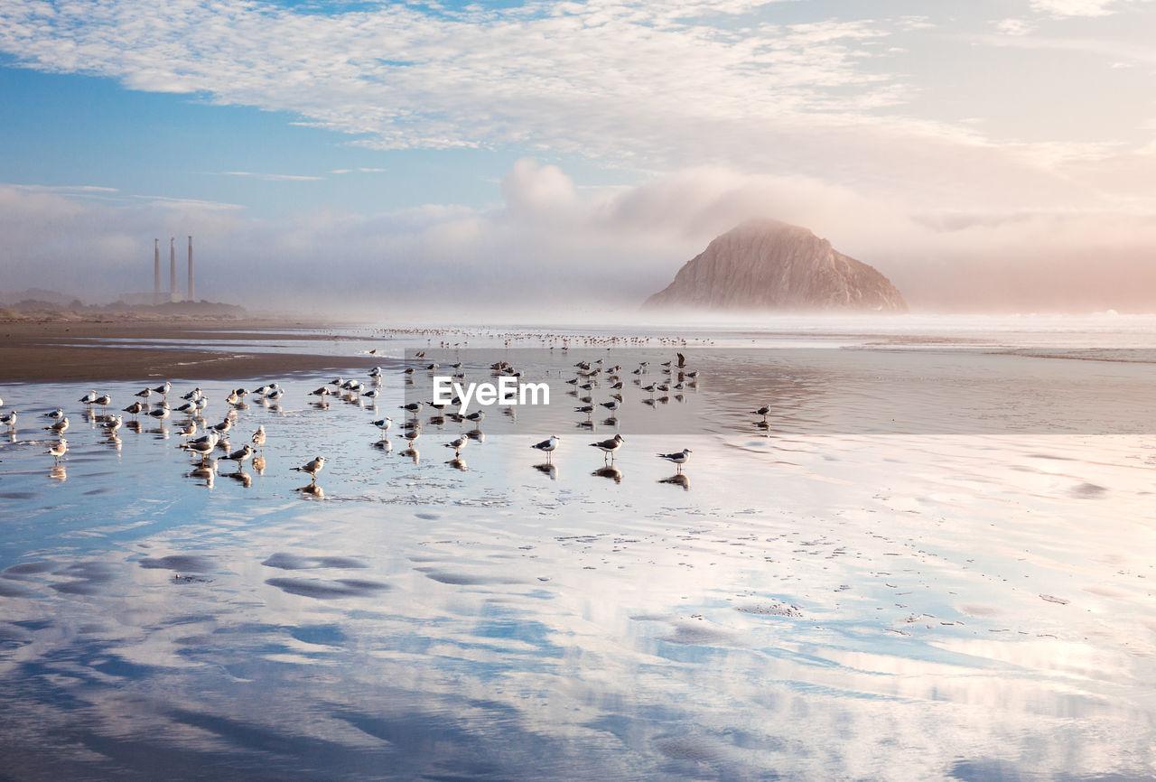 FLOCK OF BIRDS IN A SEA