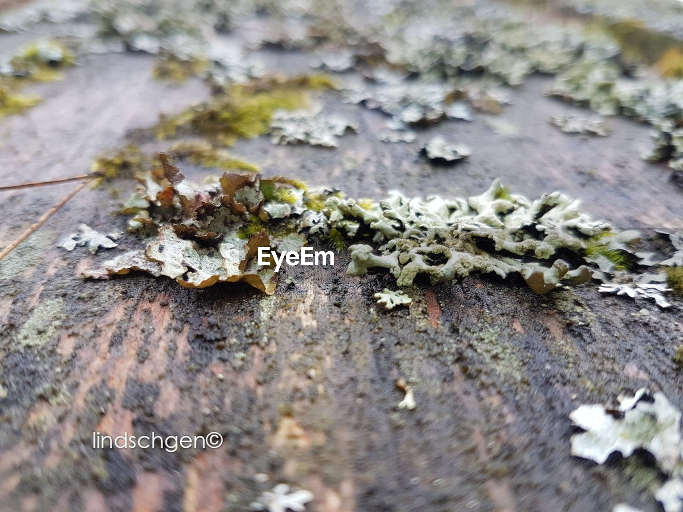 close-up, lichen, fungus, nature, no people, outdoors, textured, day, fragility