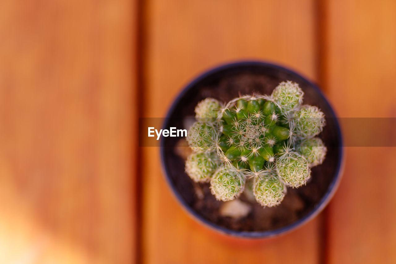 green color, close-up, succulent plant, plant, no people, potted plant, growth, cactus, selective focus, indoors, focus on foreground, nature, directly above, wood - material, beauty in nature, leaf, day, freshness, flower, flower pot