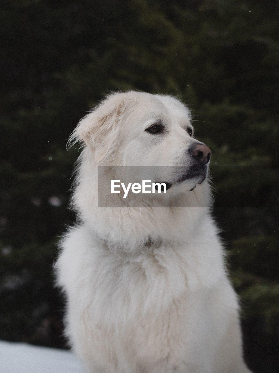 CLOSE-UP OF DOG SITTING ON FLOOR