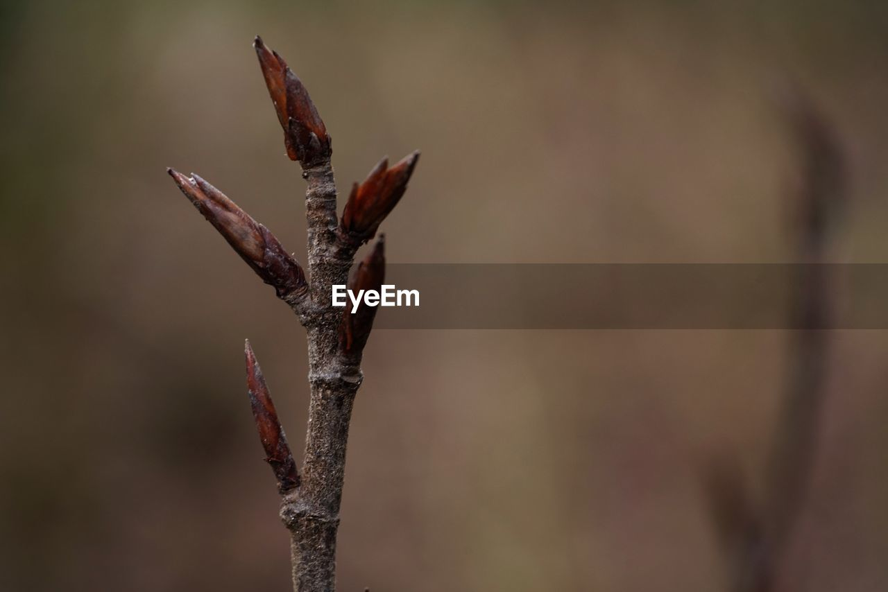 focus on foreground, no people, close-up, growth, plant, nature, day, beauty in nature, outdoors, tranquility, selective focus, brown, plant stem, sharp, beginnings, plant part, leaf, dry, twig, bud