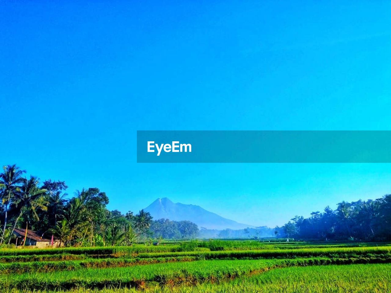 plant, sky, scenics - nature, tree, landscape, tranquil scene, beauty in nature, blue, copy space, tranquility, land, field, clear sky, environment, growth, nature, green color, rural scene, mountain, no people, outdoors