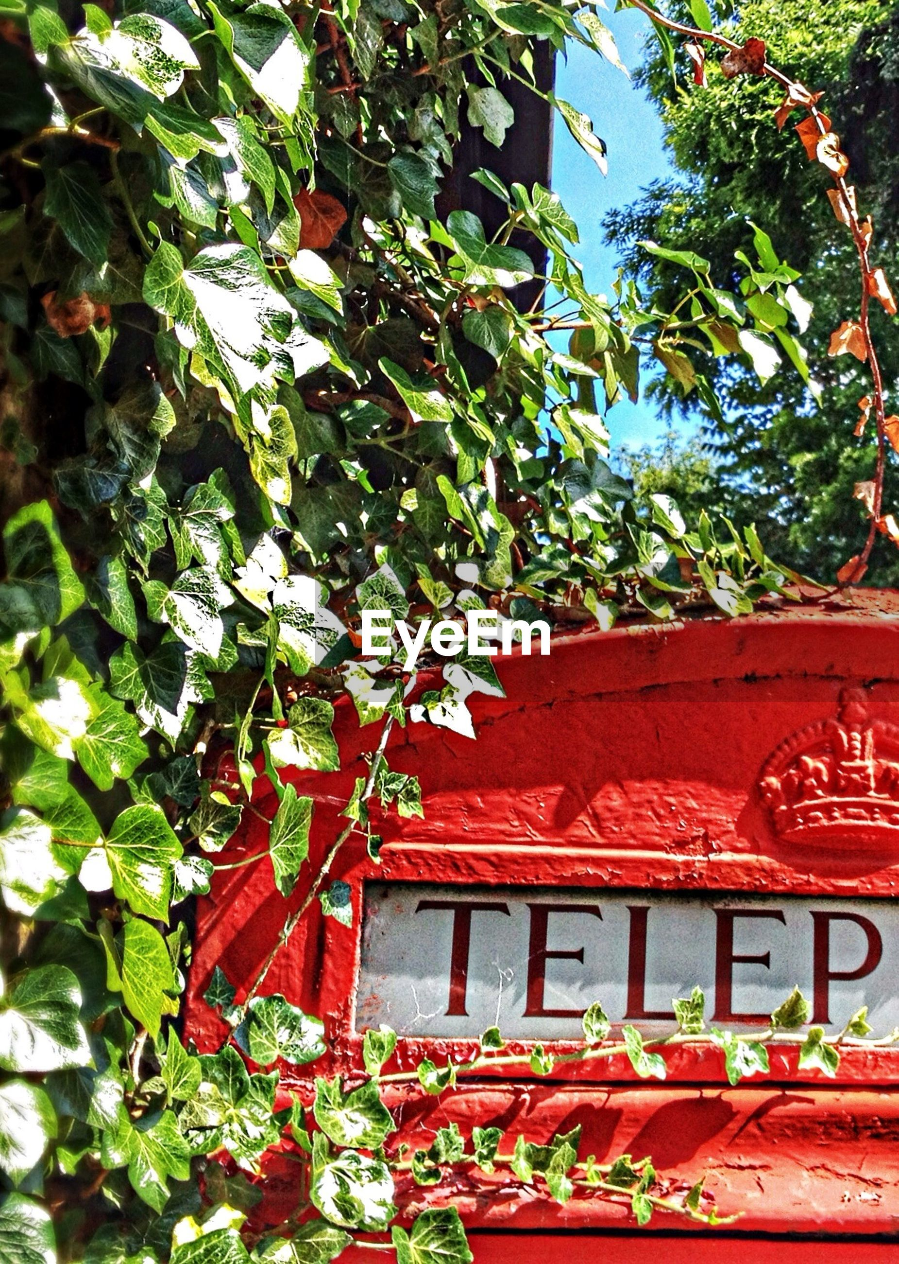Western script written on telephone booth in park