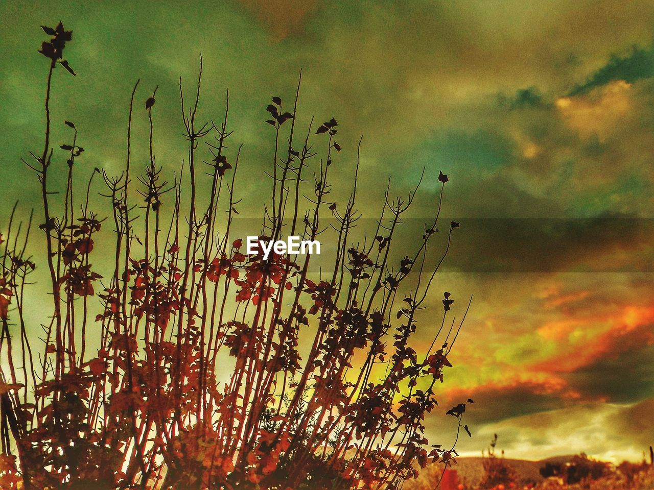 nature, sky, sunset, growth, beauty in nature, plant, silhouette, cloud - sky, no people, outdoors, scenics, freshness, day