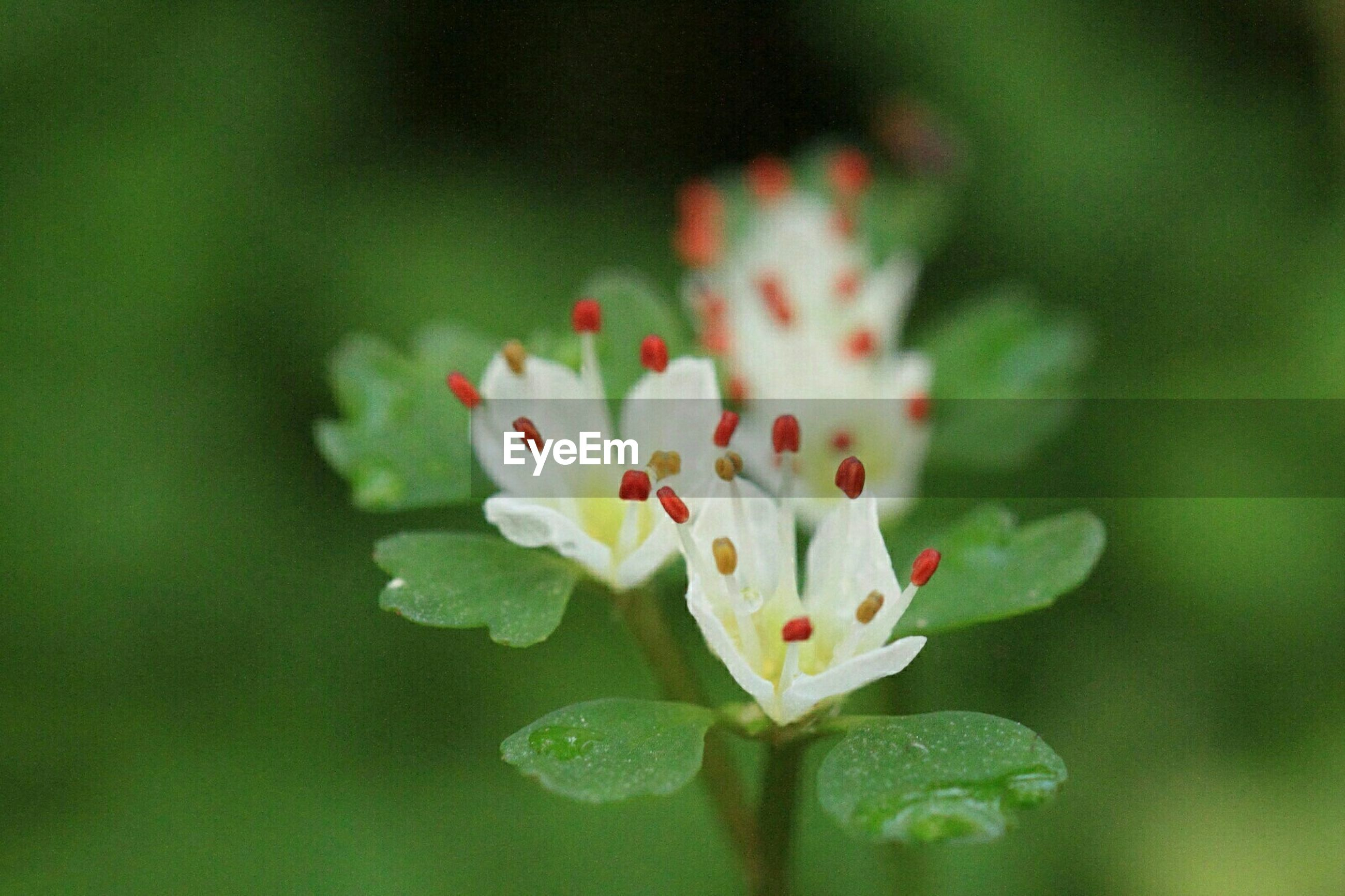 flower, petal, freshness, fragility, flower head, growth, close-up, beauty in nature, focus on foreground, blooming, nature, plant, selective focus, in bloom, bud, single flower, stem, leaf, blossom, white color