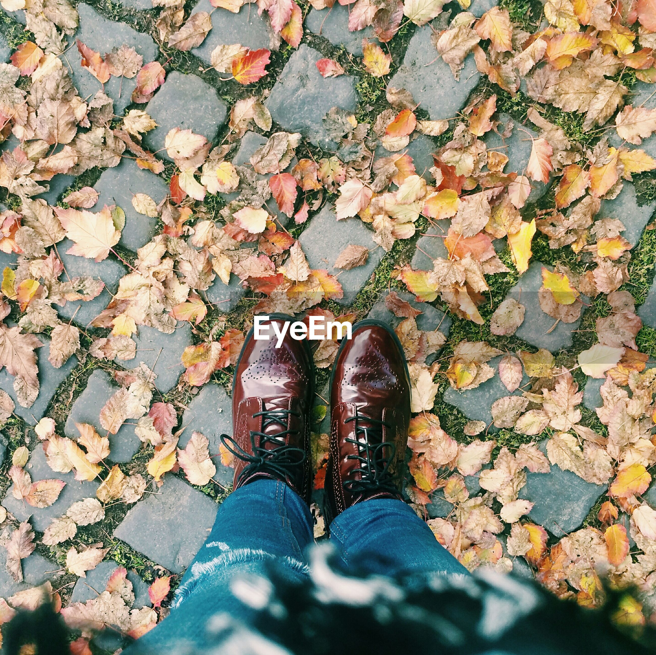 Low section of person standing on footpath covered with fallen leaves