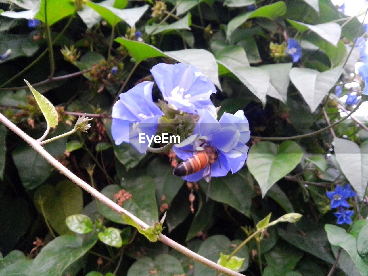 Close-up of bee pollinating flower in garden