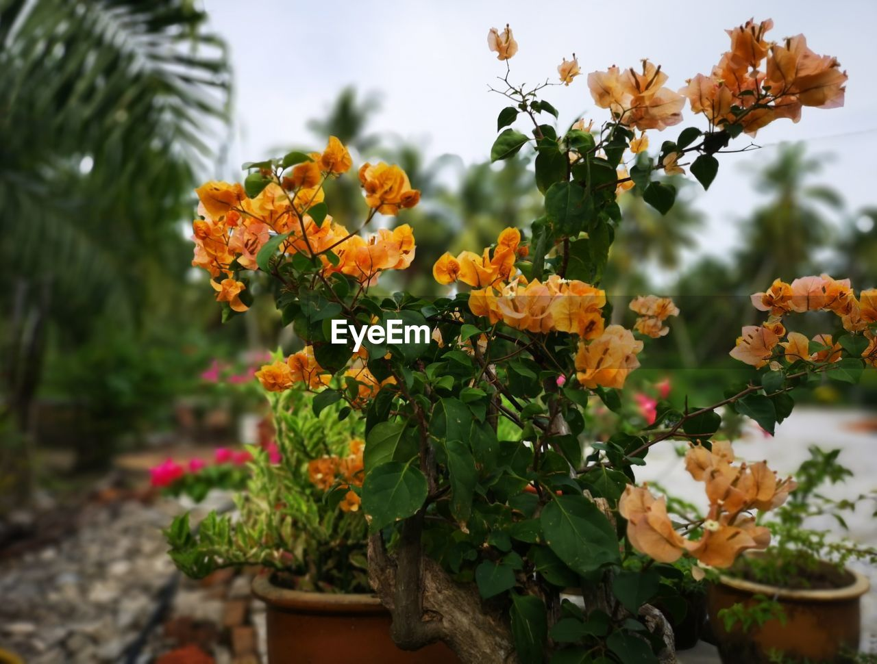 plant, flowering plant, flower, growth, beauty in nature, freshness, vulnerability, fragility, nature, focus on foreground, petal, no people, flower head, orange color, plant part, close-up, leaf, day, inflorescence, green color, lantana, outdoors